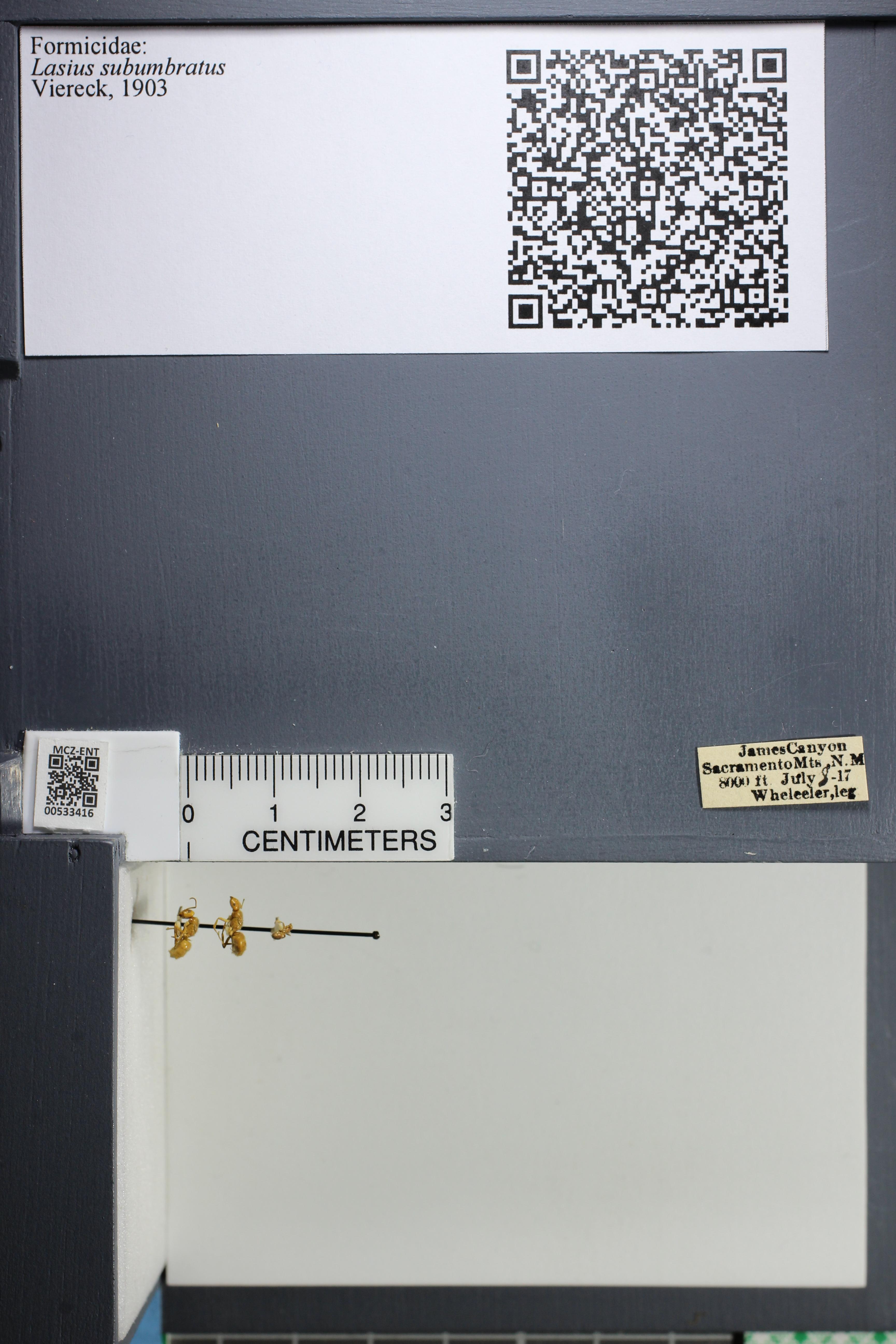 http://mczbase.mcz.harvard.edu/specimen_images/ent-formicidae/datashot/2014_09_23/IMG_305284.JPG