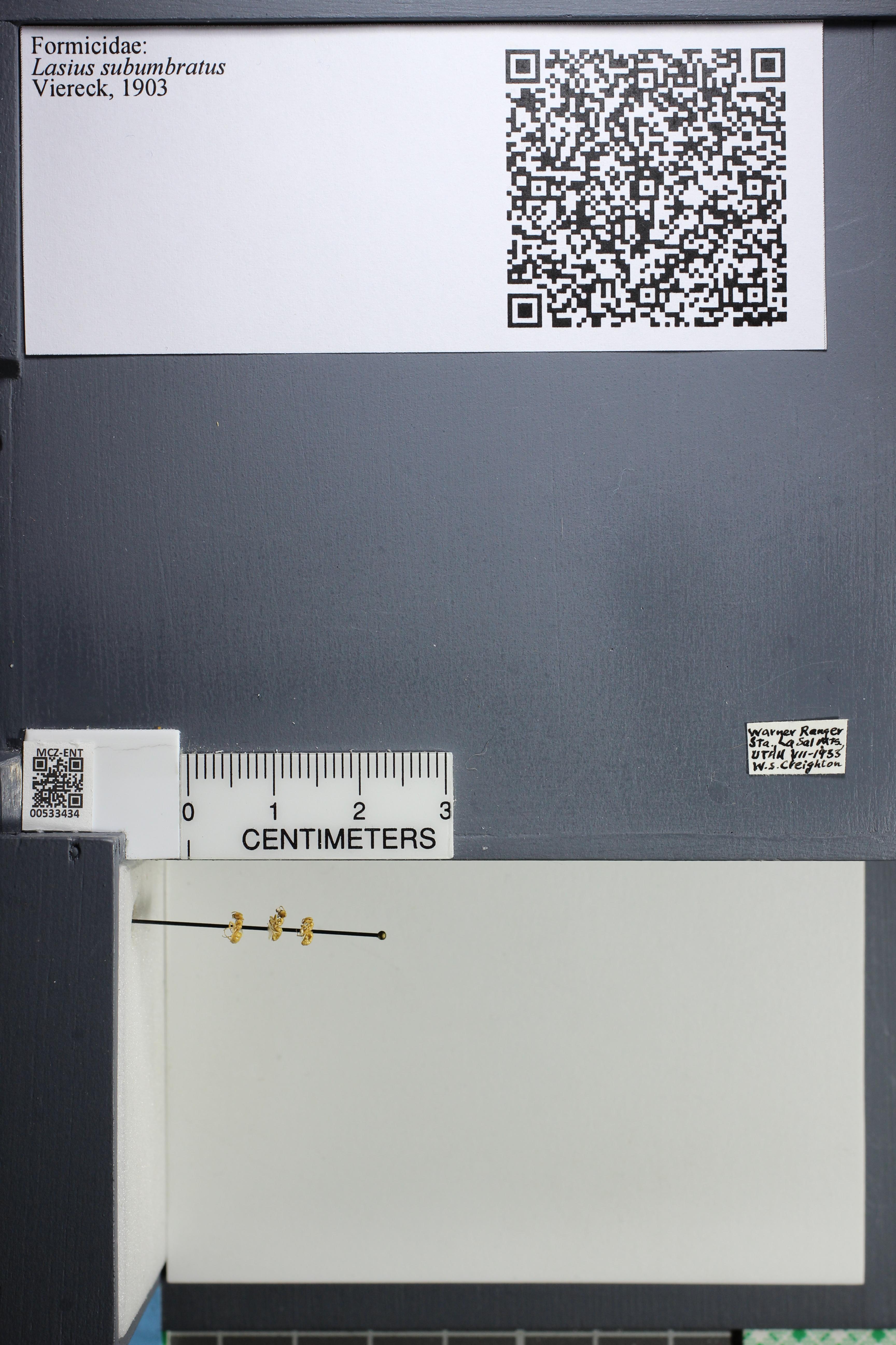 http://mczbase.mcz.harvard.edu/specimen_images/ent-formicidae/datashot/2014_09_23/IMG_305302.JPG