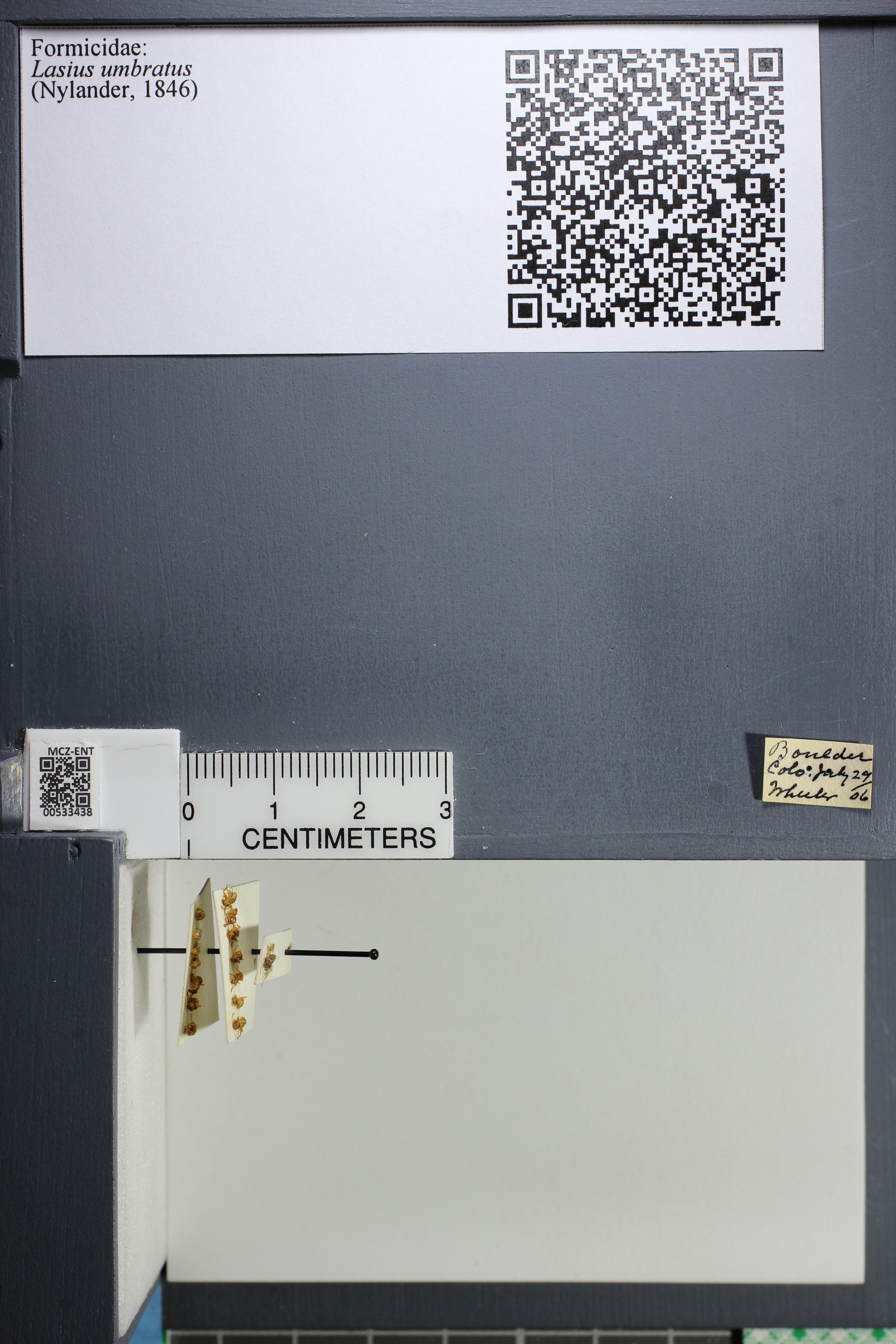 http://mczbase.mcz.harvard.edu/specimen_images/ent-formicidae/datashot/2014_09_23/IMG_305306.JPG
