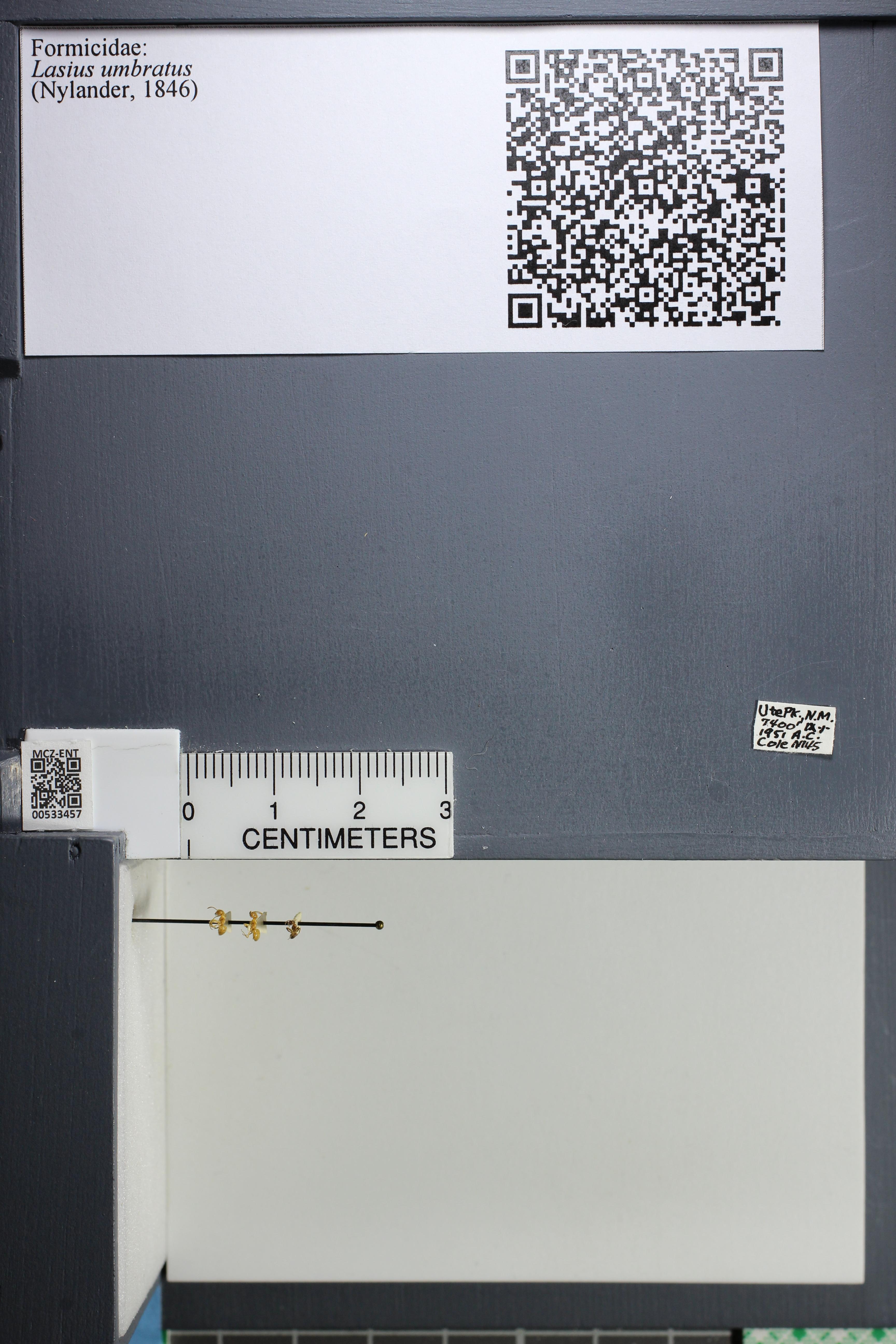 http://mczbase.mcz.harvard.edu/specimen_images/ent-formicidae/datashot/2014_09_23/IMG_305325.JPG
