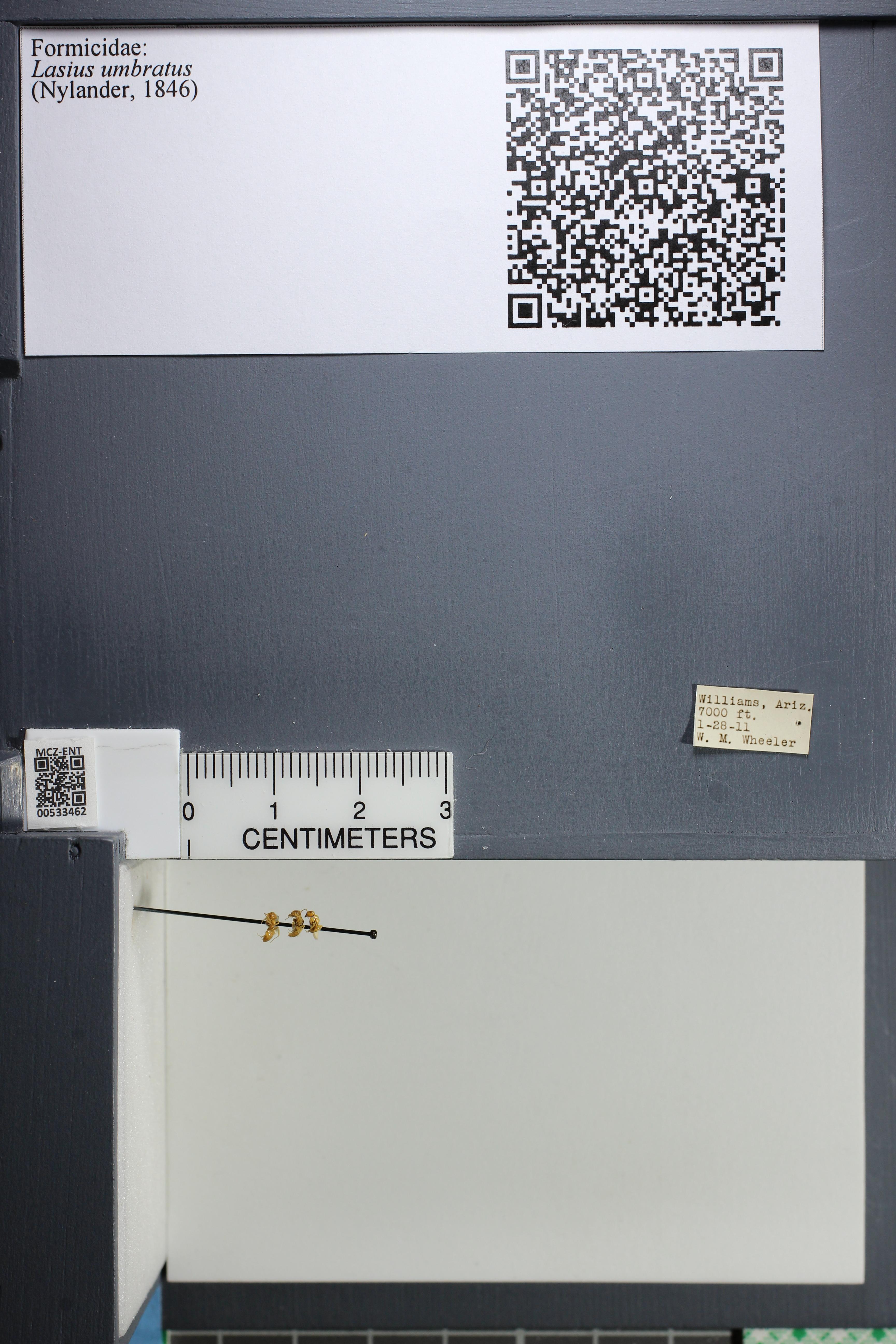 http://mczbase.mcz.harvard.edu/specimen_images/ent-formicidae/datashot/2014_09_23/IMG_305330.JPG
