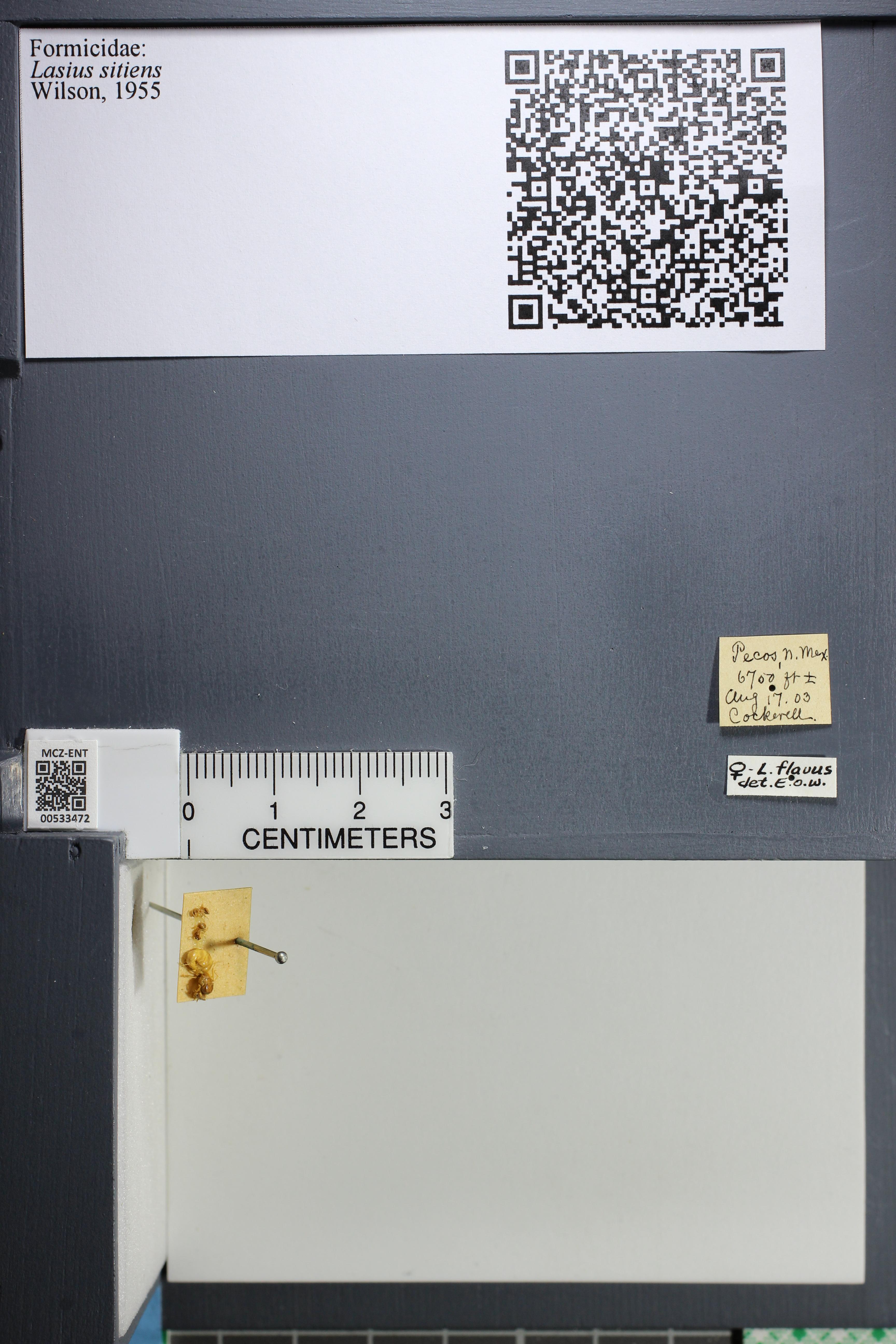 http://mczbase.mcz.harvard.edu/specimen_images/ent-formicidae/datashot/2014_09_24/IMG_305340.JPG