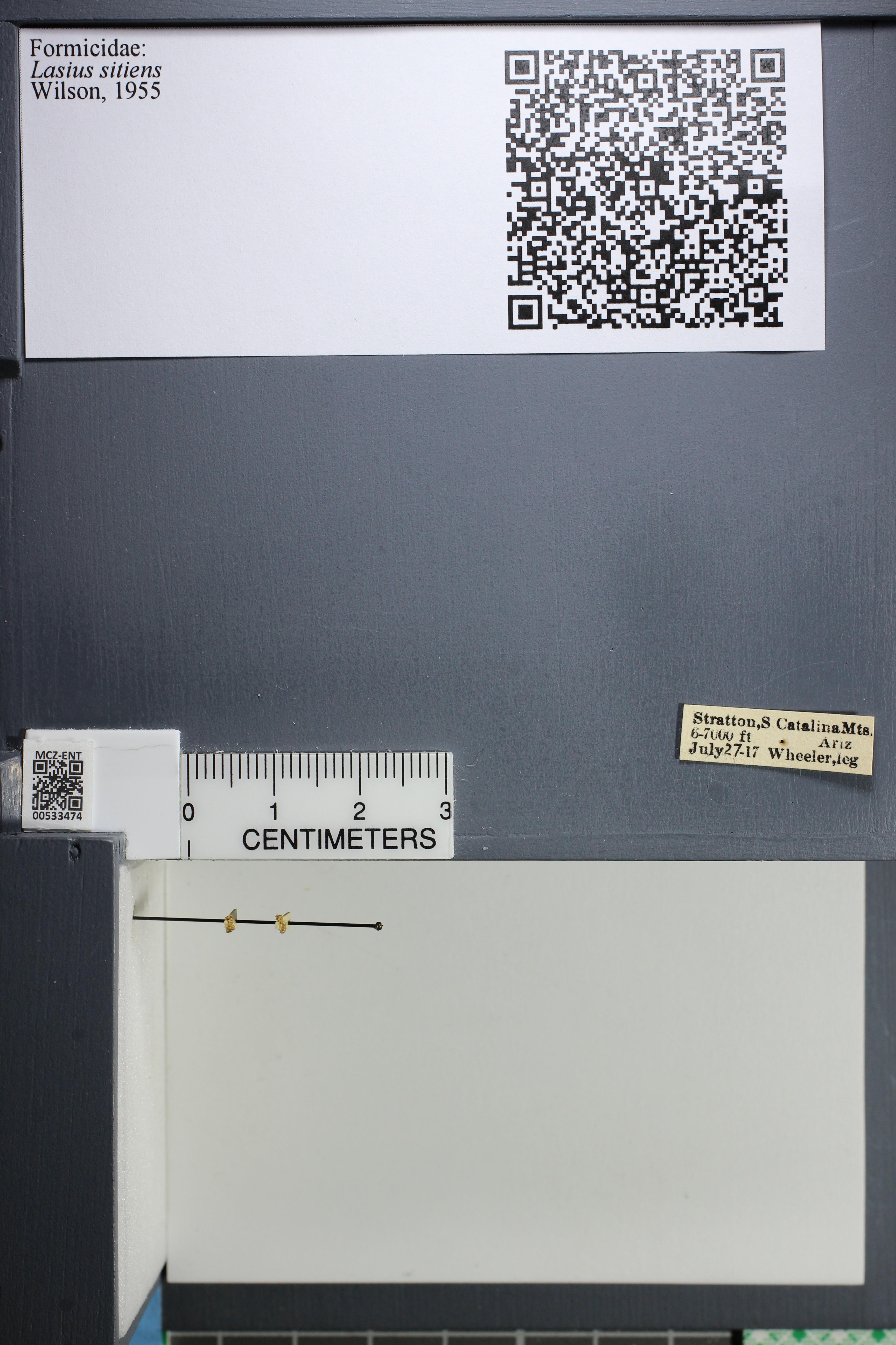 http://mczbase.mcz.harvard.edu/specimen_images/ent-formicidae/datashot/2014_09_24/IMG_305342.JPG