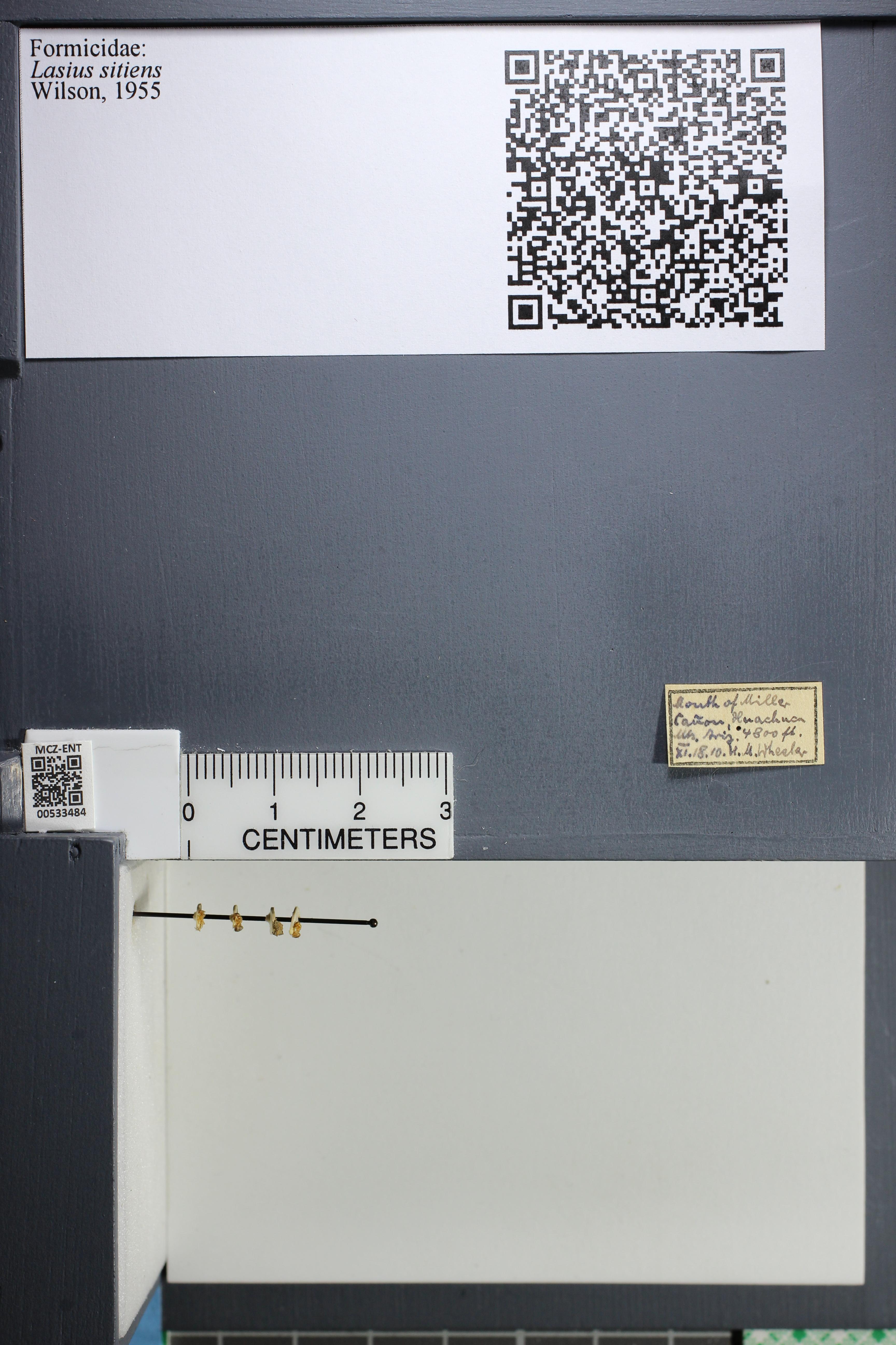 http://mczbase.mcz.harvard.edu/specimen_images/ent-formicidae/datashot/2014_09_24/IMG_305352.JPG