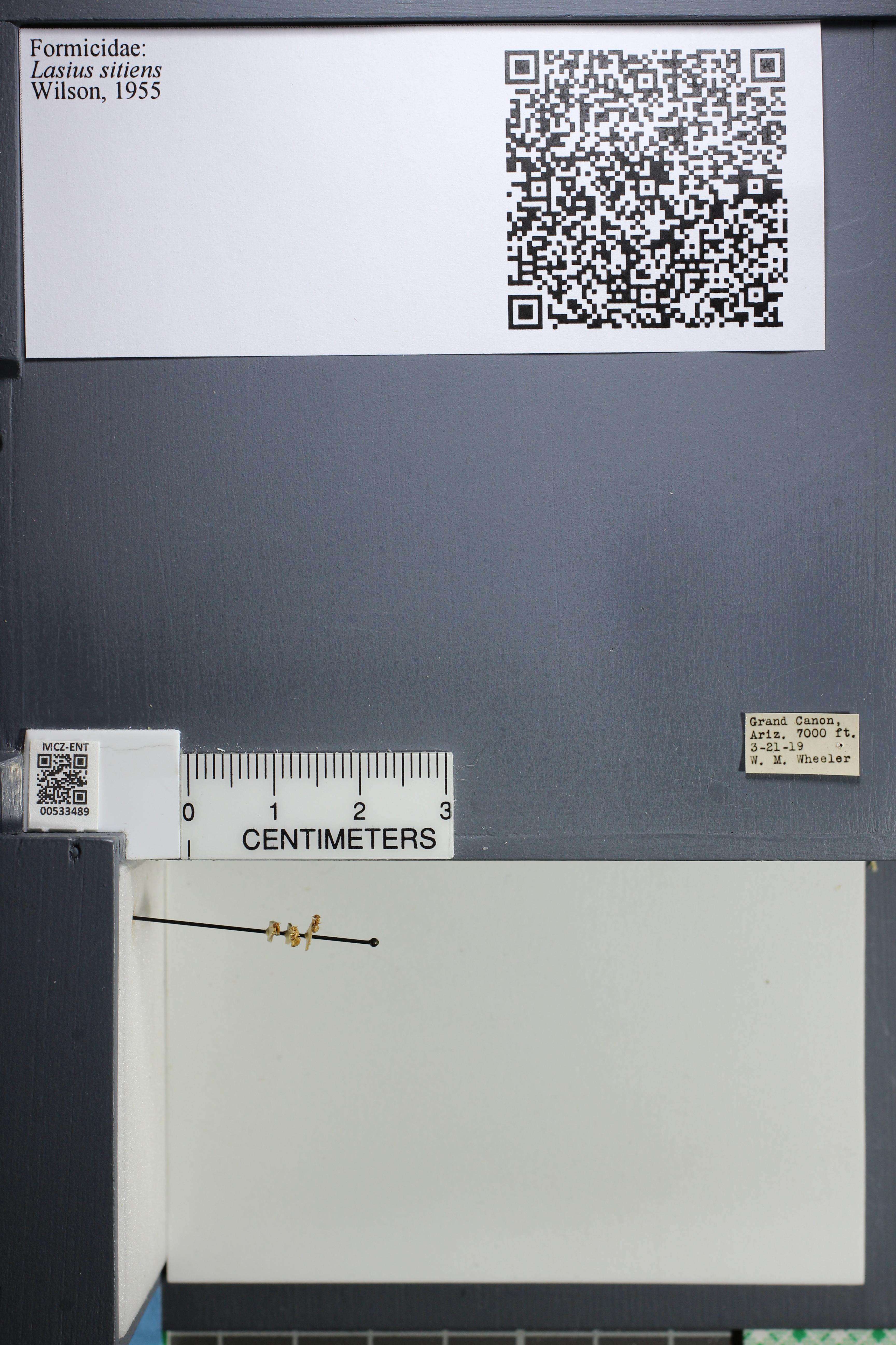 http://mczbase.mcz.harvard.edu/specimen_images/ent-formicidae/datashot/2014_09_24/IMG_305357.JPG