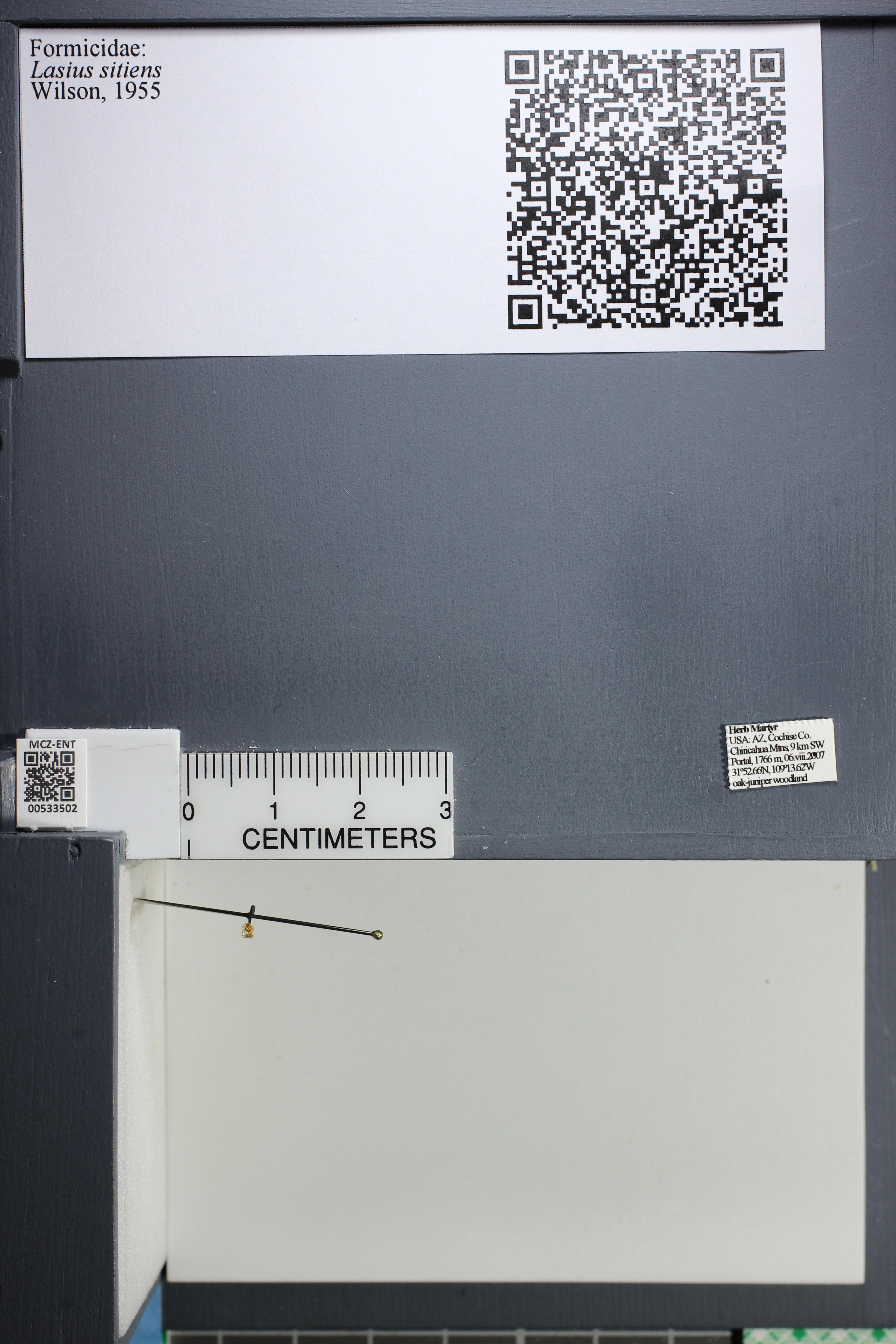 http://mczbase.mcz.harvard.edu/specimen_images/ent-formicidae/datashot/2014_09_24/IMG_305372.JPG