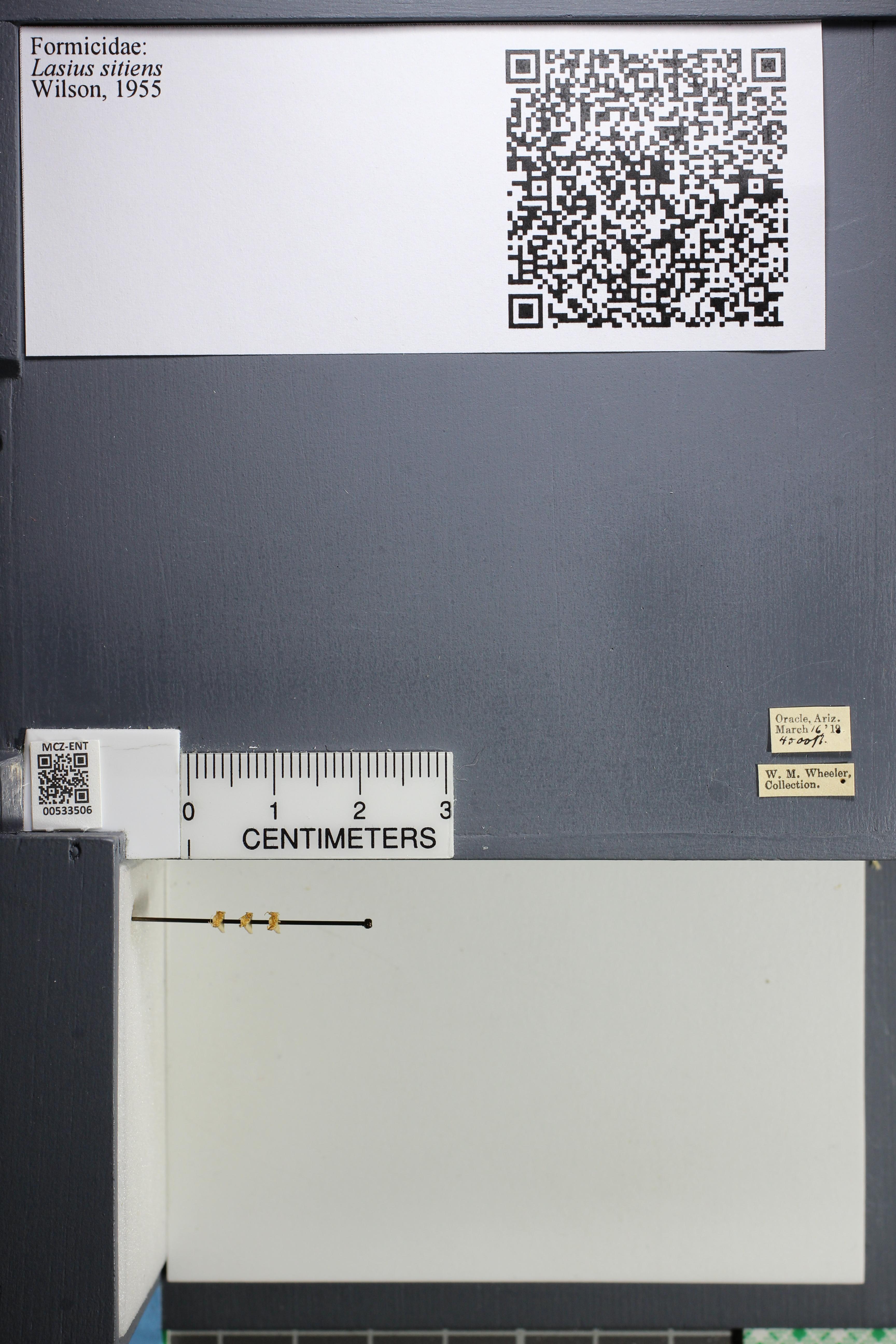 http://mczbase.mcz.harvard.edu/specimen_images/ent-formicidae/datashot/2014_09_24/IMG_305378.JPG