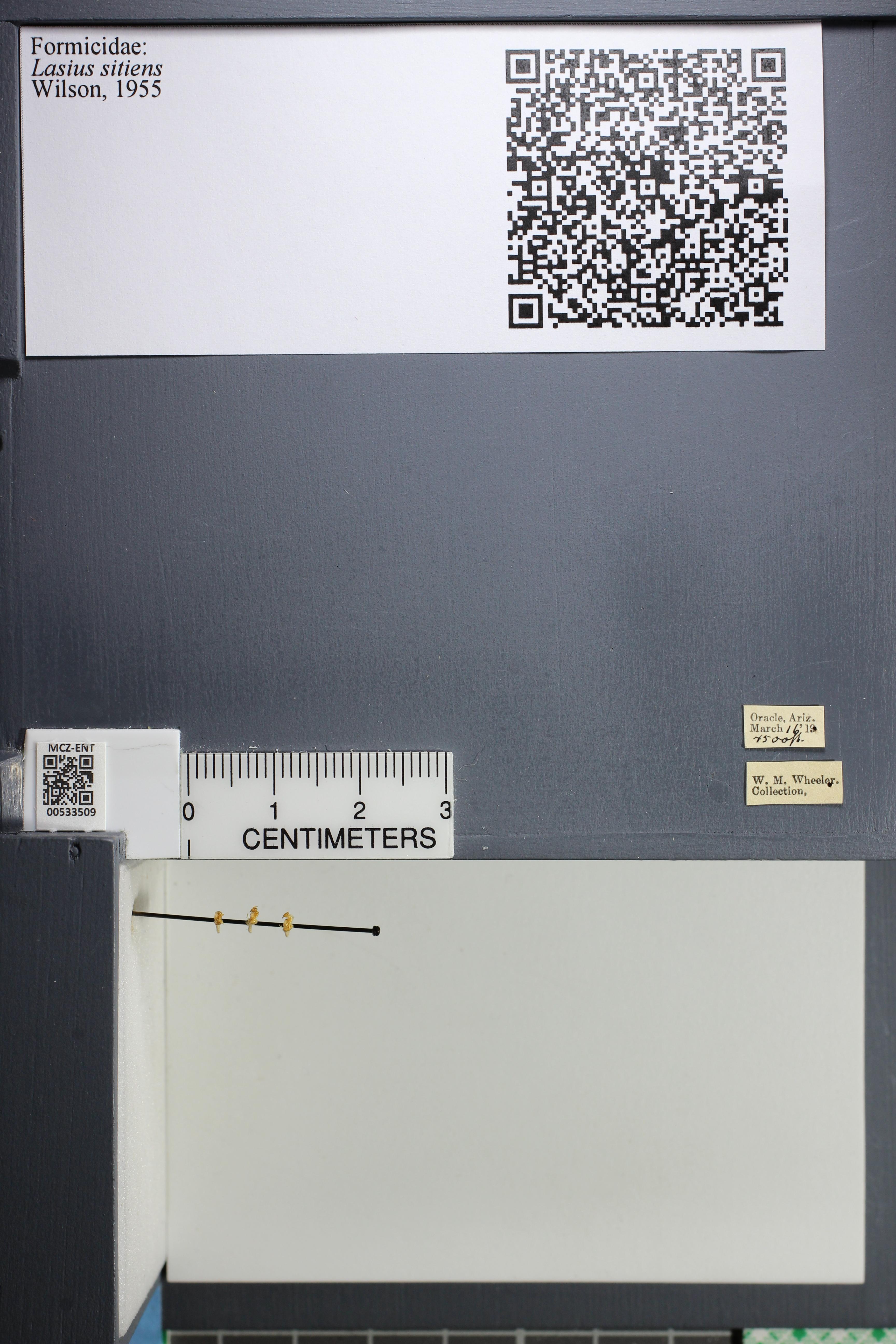 http://mczbase.mcz.harvard.edu/specimen_images/ent-formicidae/datashot/2014_09_24/IMG_305381.JPG