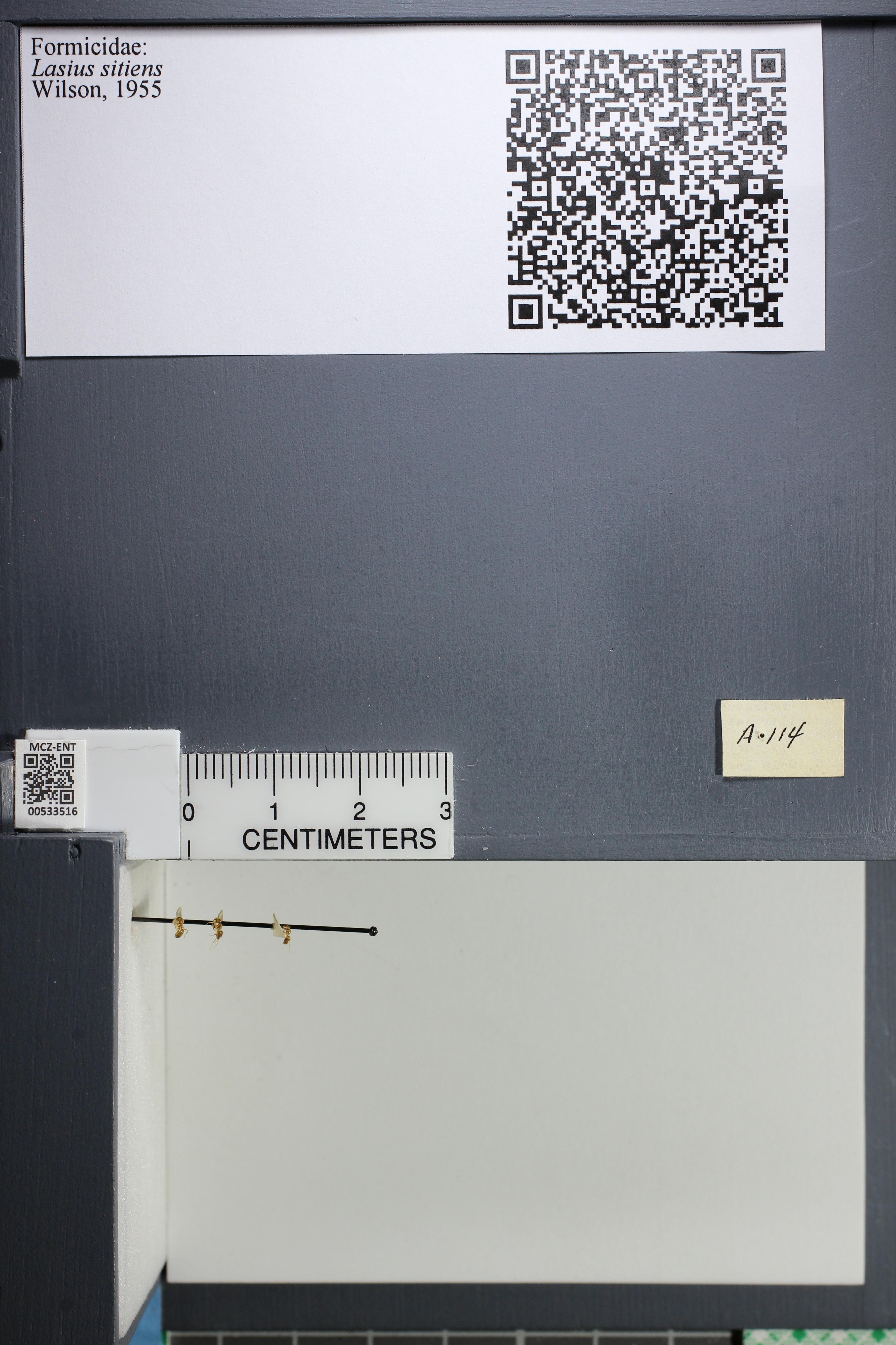 http://mczbase.mcz.harvard.edu/specimen_images/ent-formicidae/datashot/2014_09_24/IMG_305389.JPG
