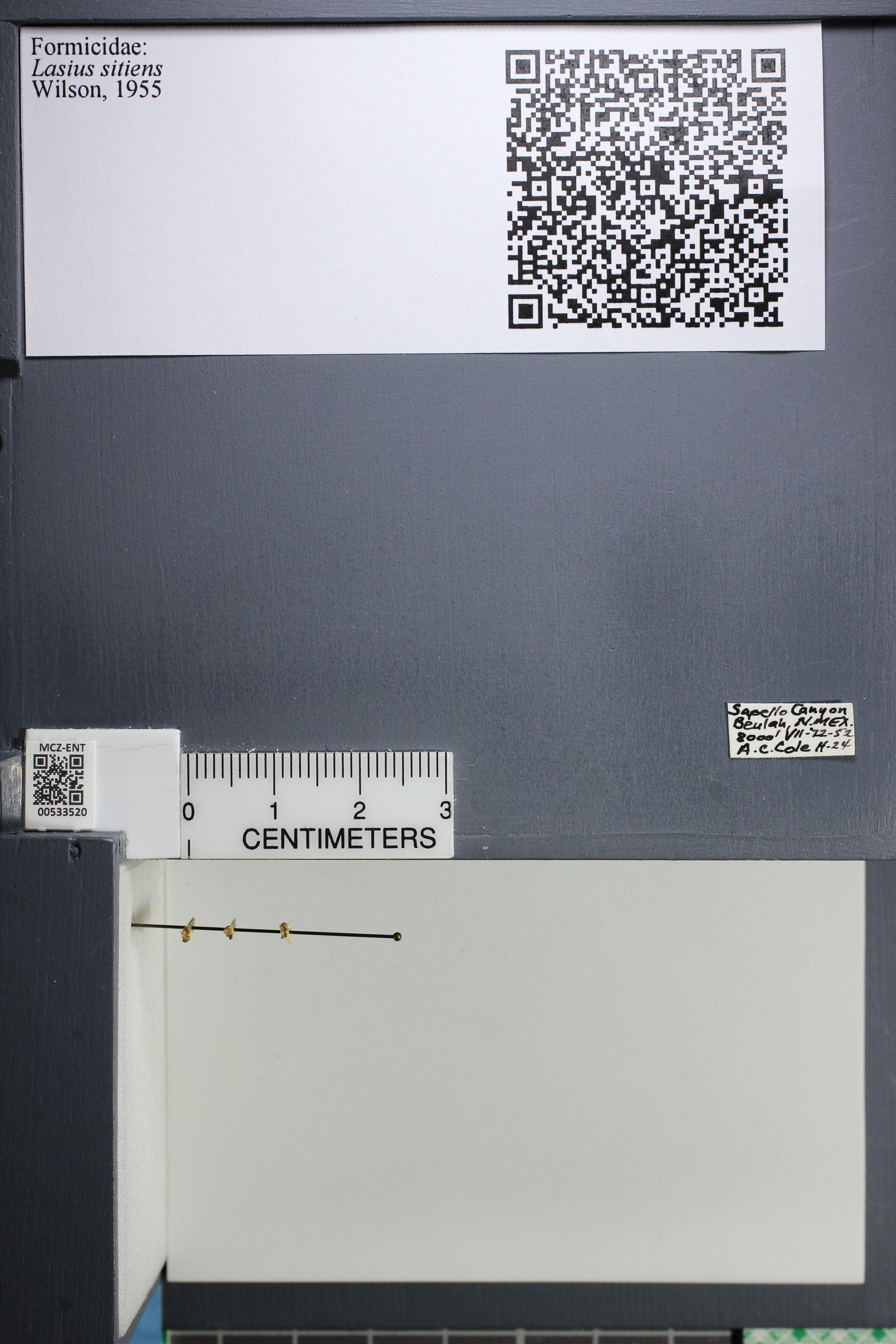 http://mczbase.mcz.harvard.edu/specimen_images/ent-formicidae/datashot/2014_09_24/IMG_305393.JPG