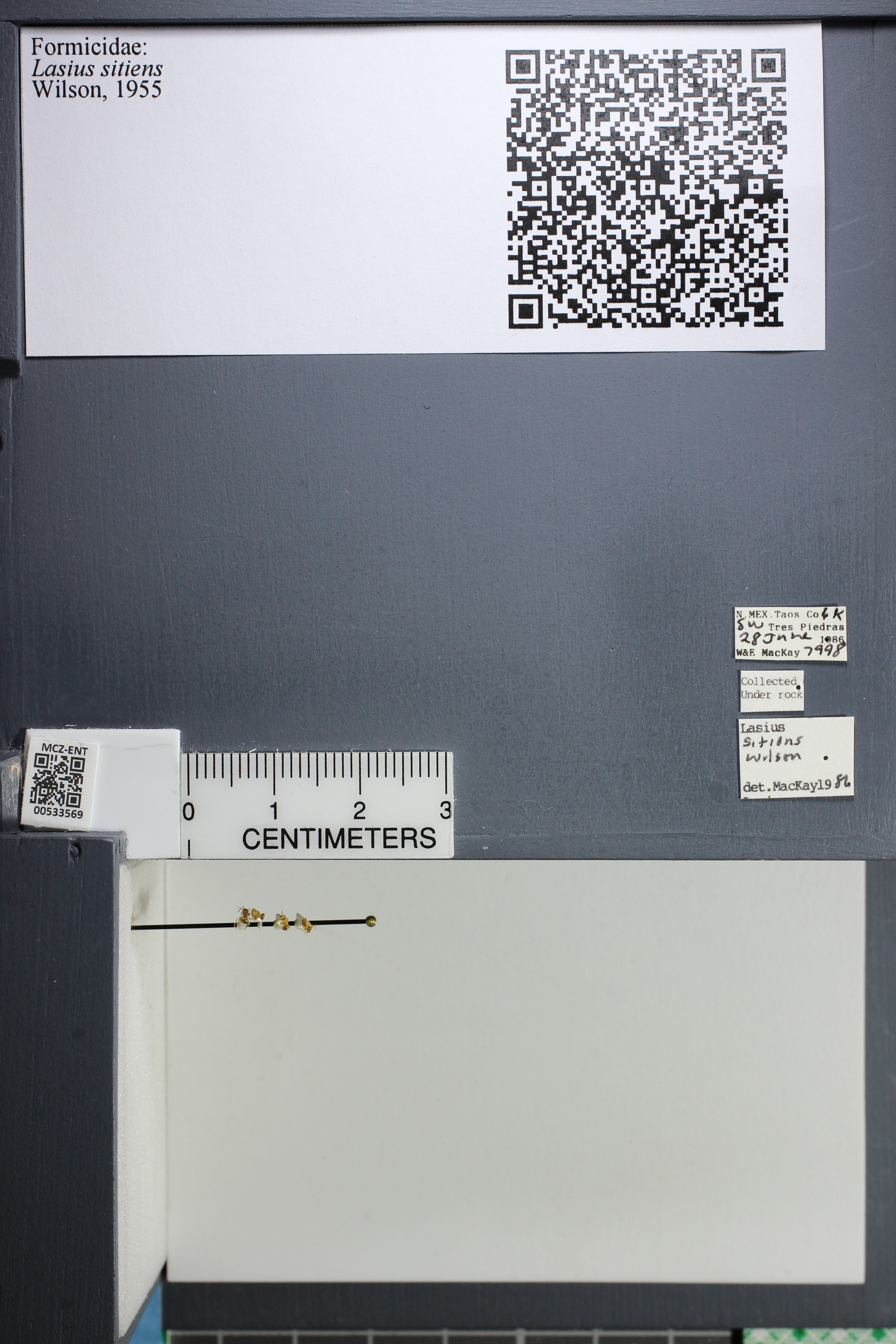 http://mczbase.mcz.harvard.edu/specimen_images/ent-formicidae/datashot/2014_09_24/IMG_305443.JPG