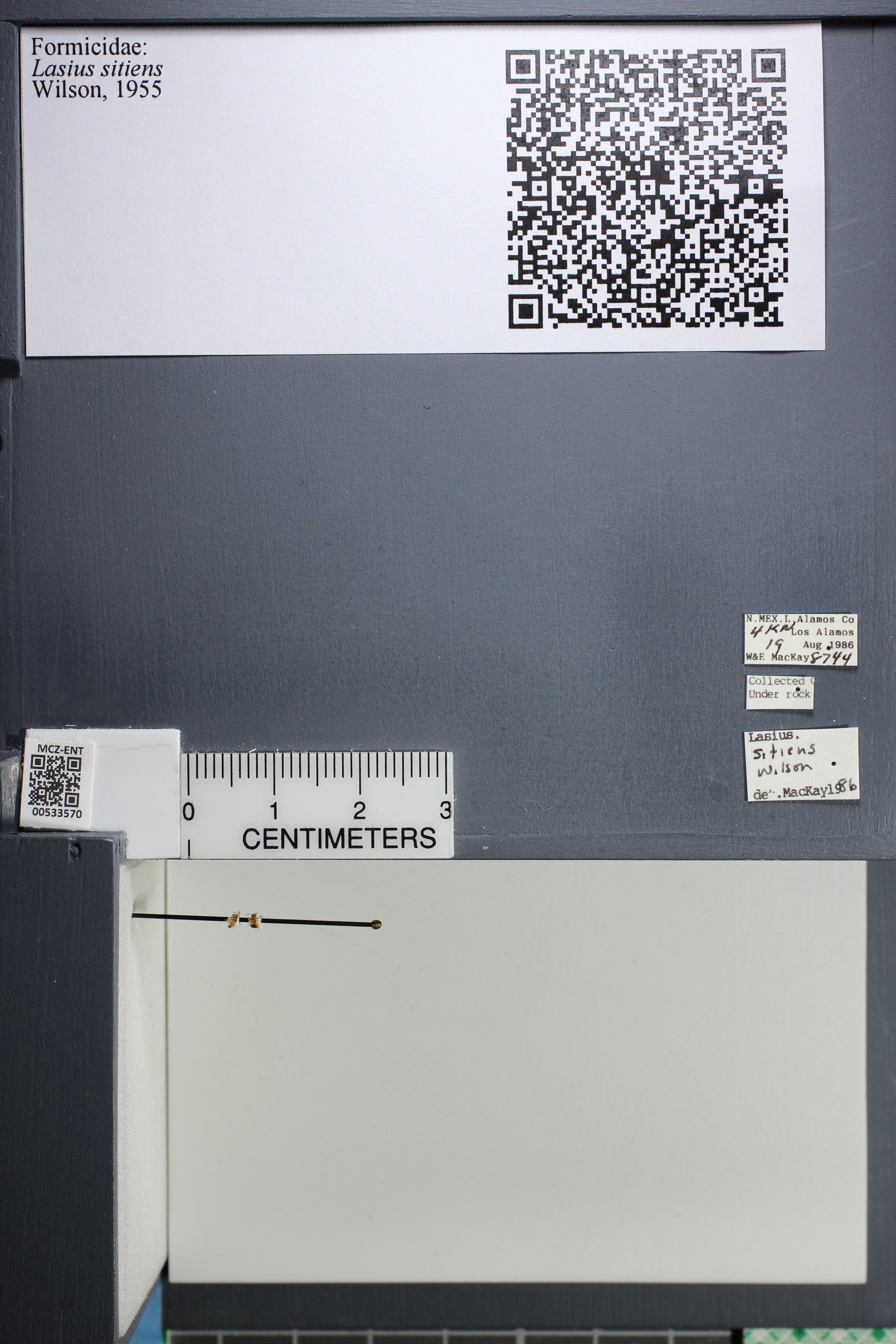 http://mczbase.mcz.harvard.edu/specimen_images/ent-formicidae/datashot/2014_09_24/IMG_305444.JPG