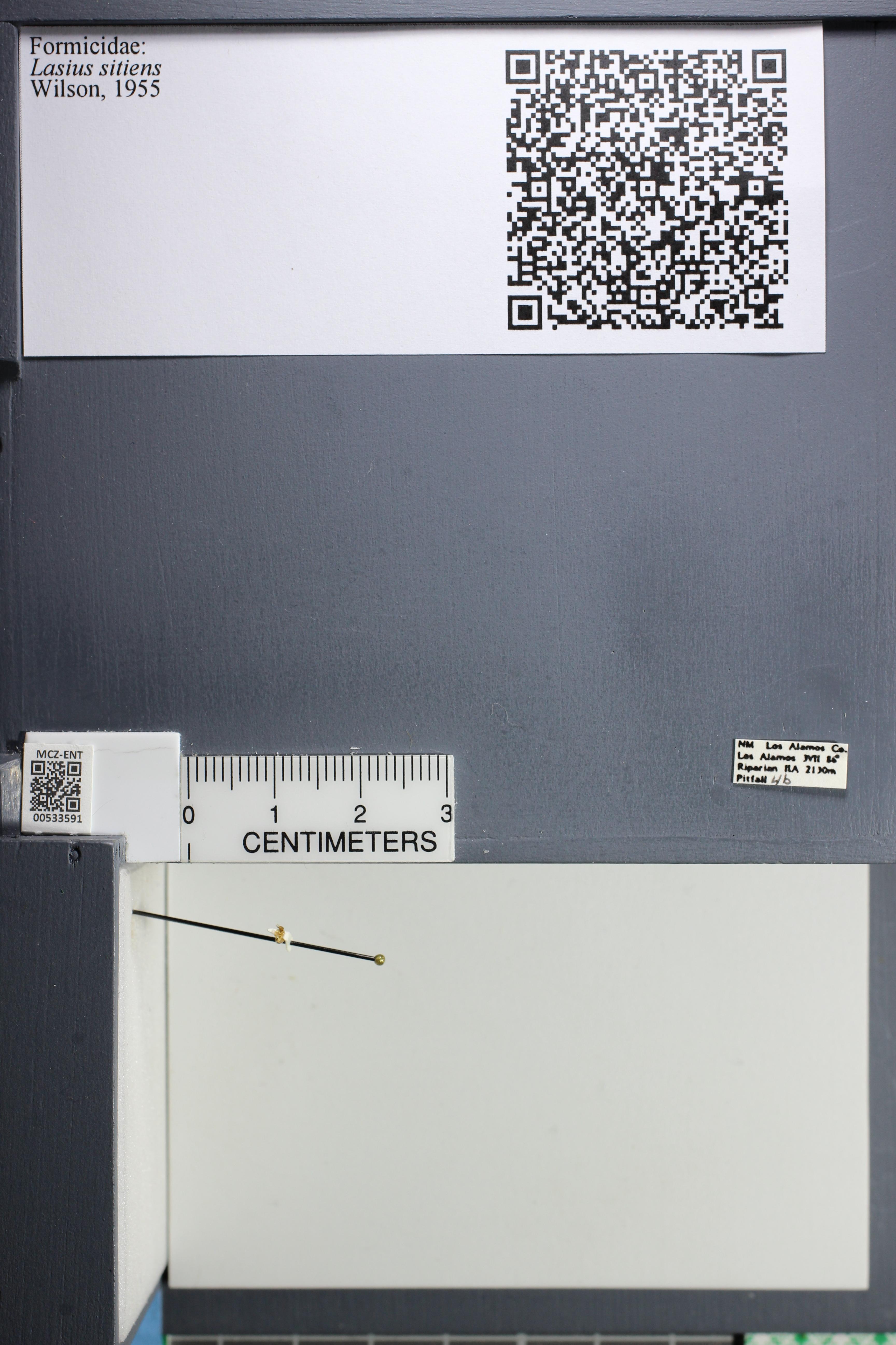 http://mczbase.mcz.harvard.edu/specimen_images/ent-formicidae/datashot/2014_09_25/IMG_305469.JPG