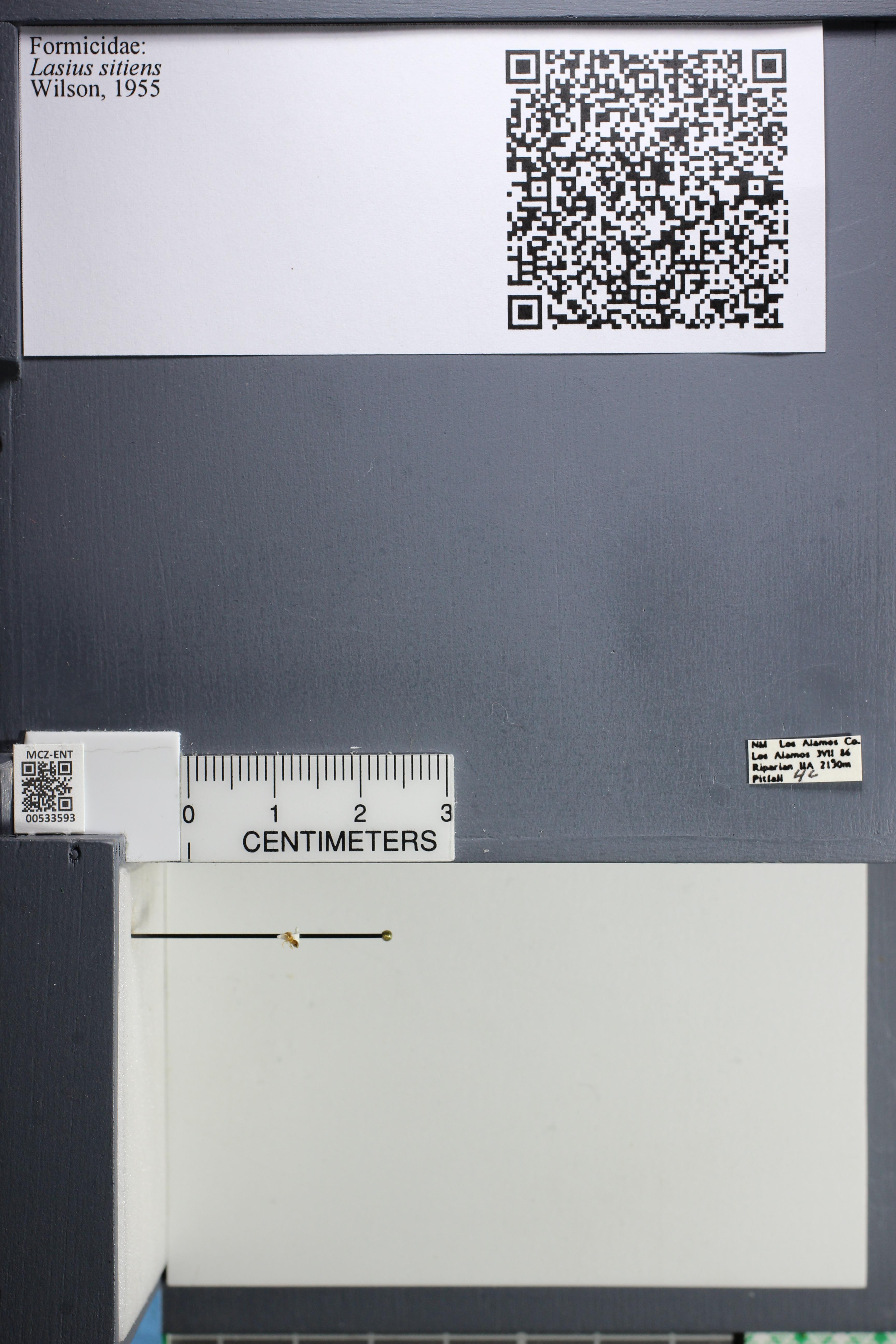 http://mczbase.mcz.harvard.edu/specimen_images/ent-formicidae/datashot/2014_09_25/IMG_305471.JPG