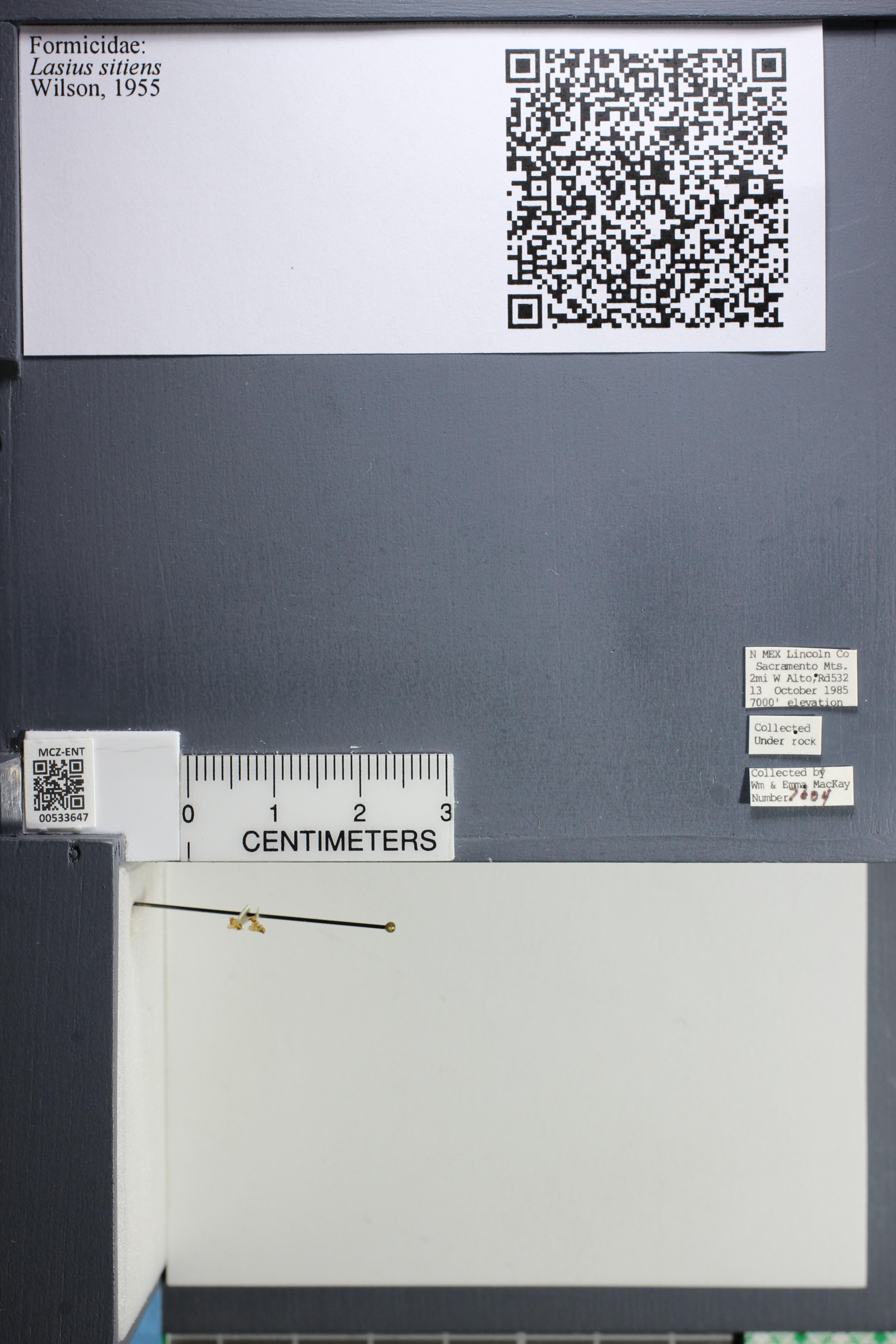 http://mczbase.mcz.harvard.edu/specimen_images/ent-formicidae/datashot/2014_09_25/IMG_305525.JPG