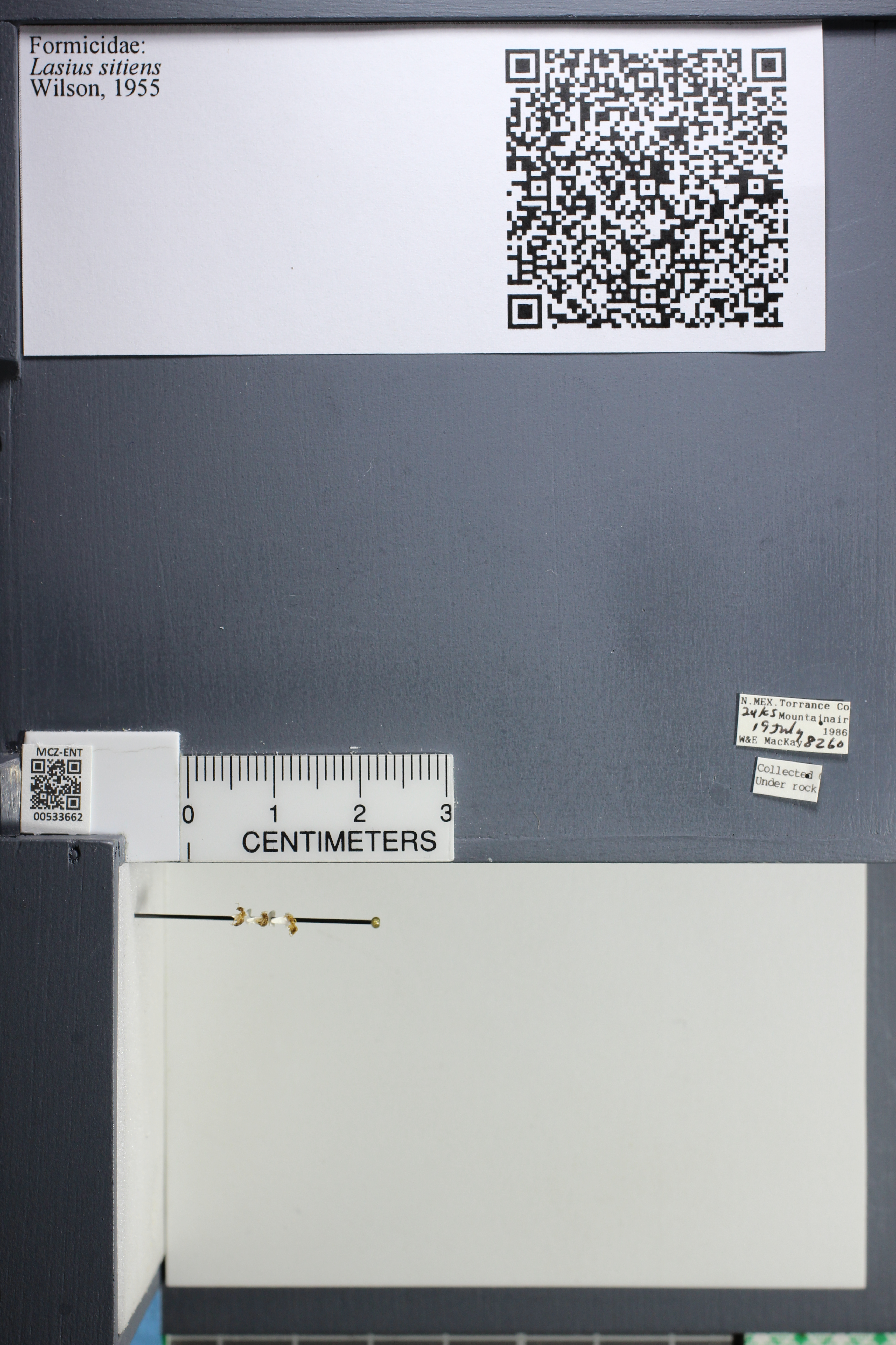 http://mczbase.mcz.harvard.edu/specimen_images/ent-formicidae/datashot/2014_09_25/IMG_305540.JPG