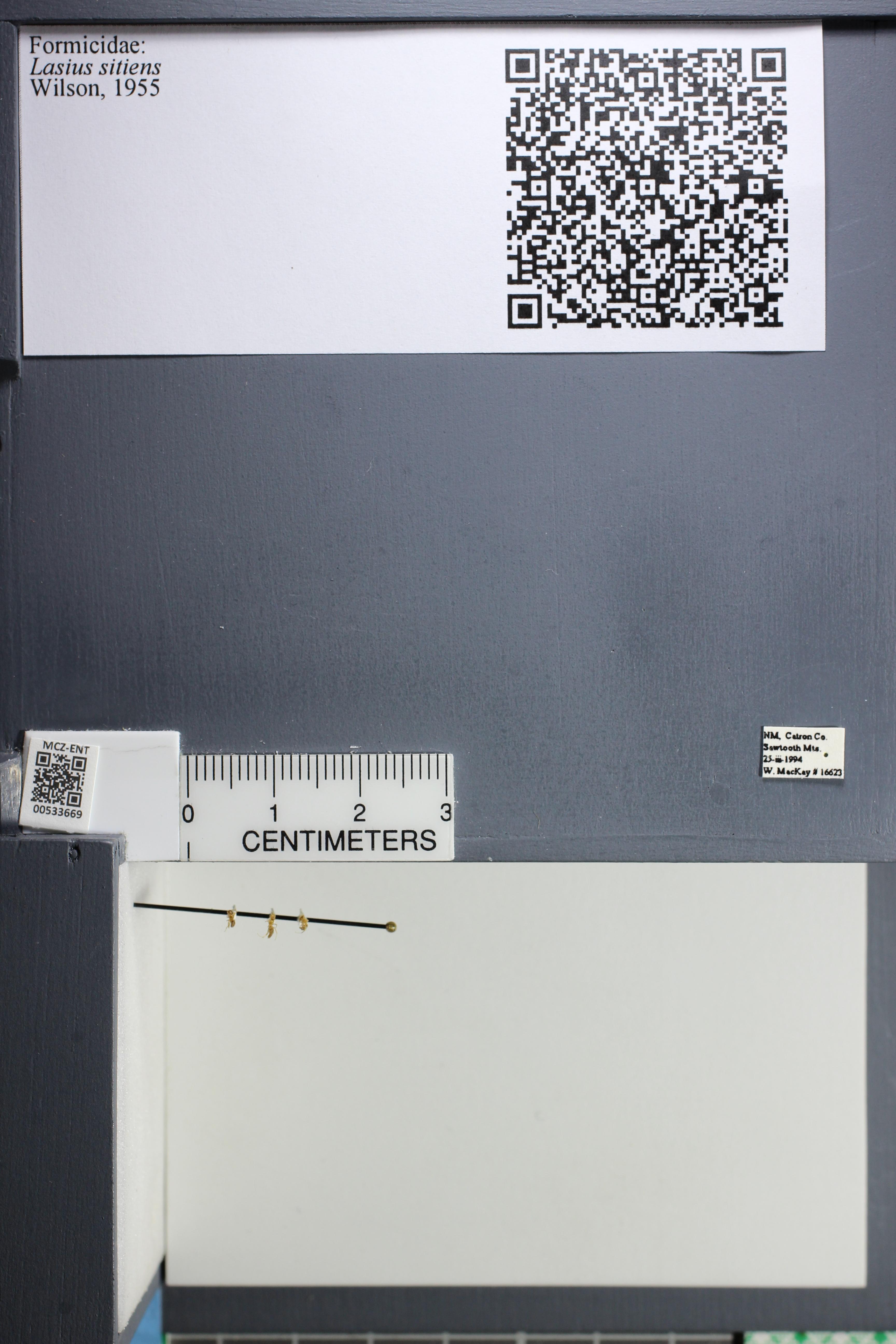 http://mczbase.mcz.harvard.edu/specimen_images/ent-formicidae/datashot/2014_09_25/IMG_305547.JPG