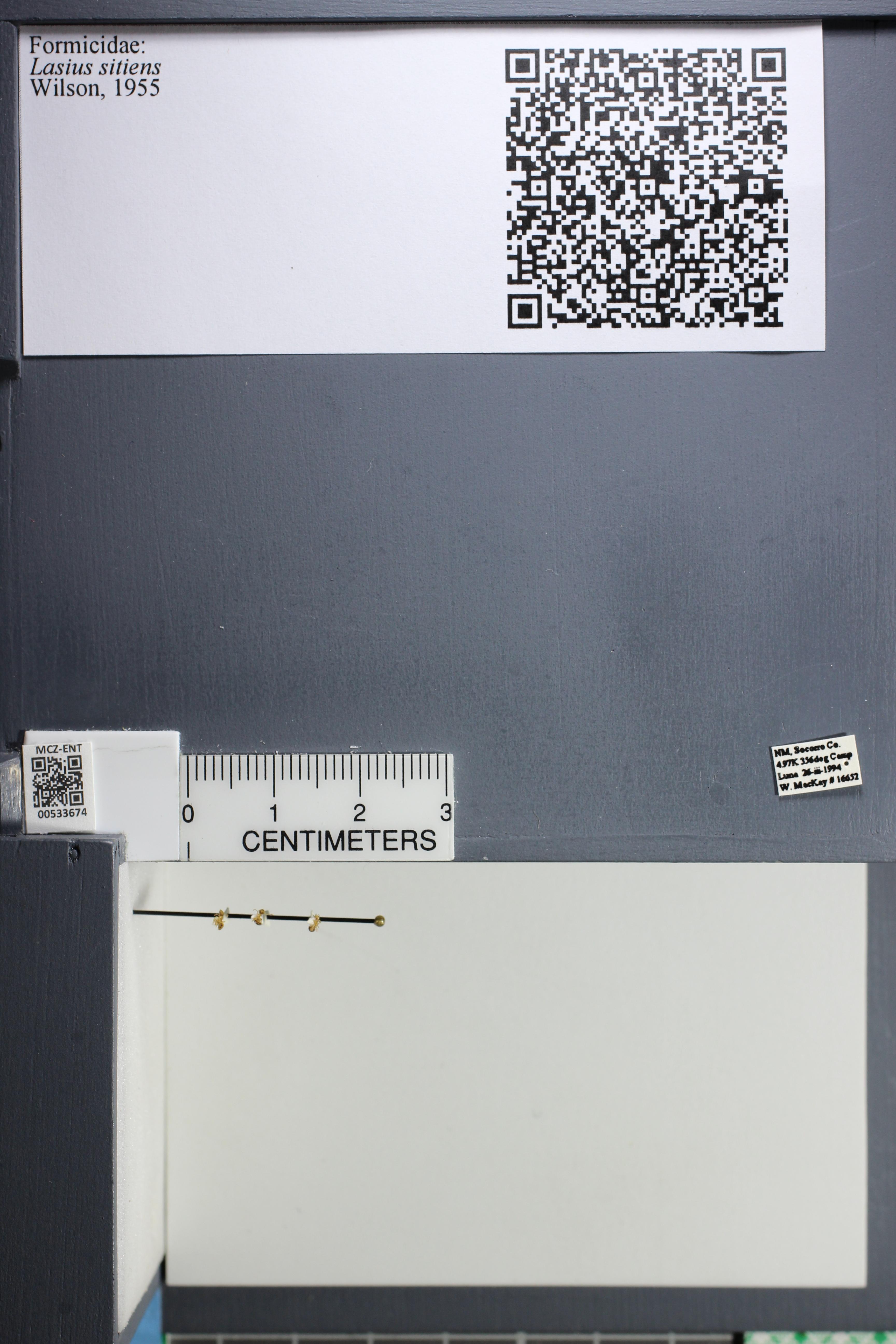 http://mczbase.mcz.harvard.edu/specimen_images/ent-formicidae/datashot/2014_09_25/IMG_305552.JPG