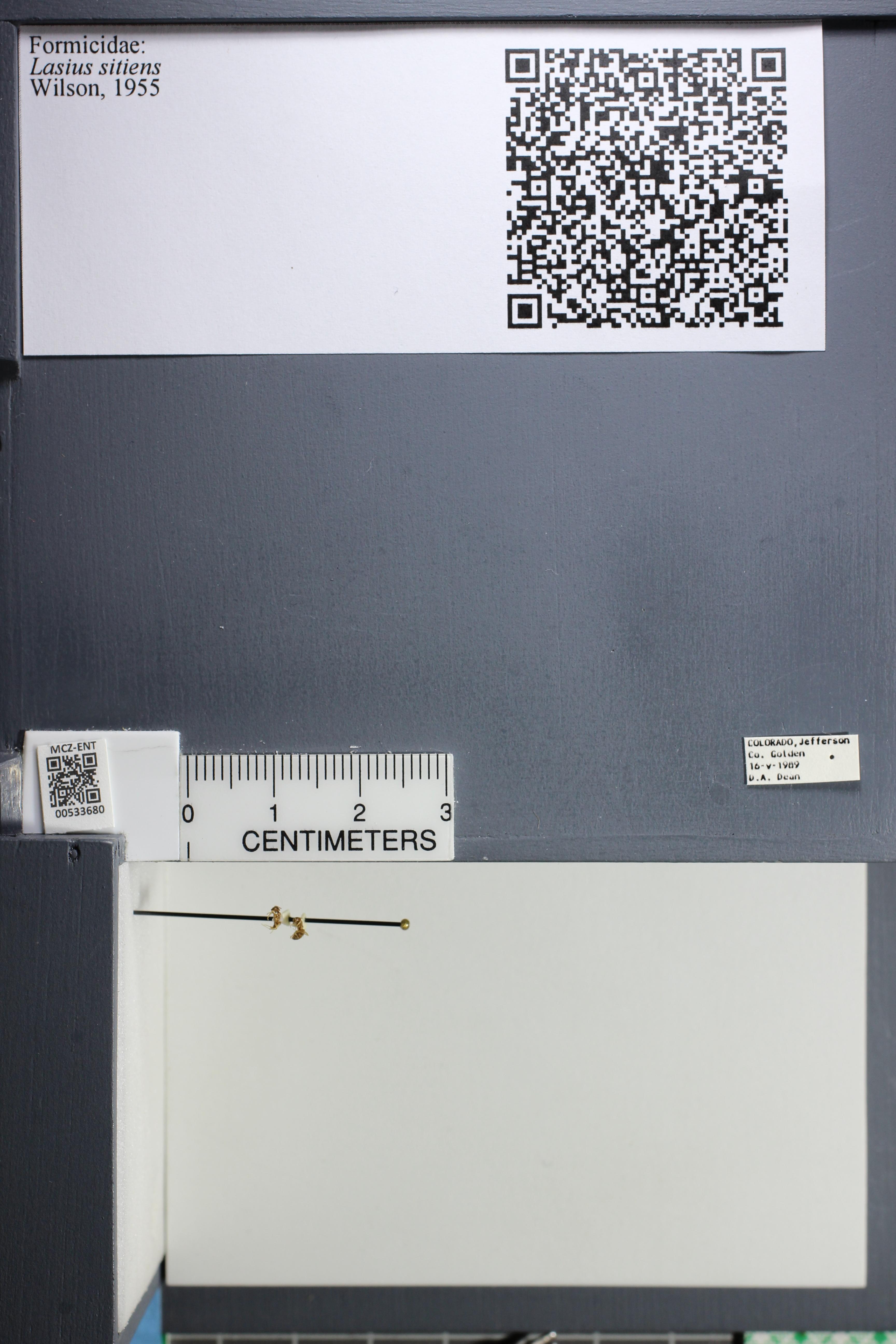 http://mczbase.mcz.harvard.edu/specimen_images/ent-formicidae/datashot/2014_09_25/IMG_305558.JPG