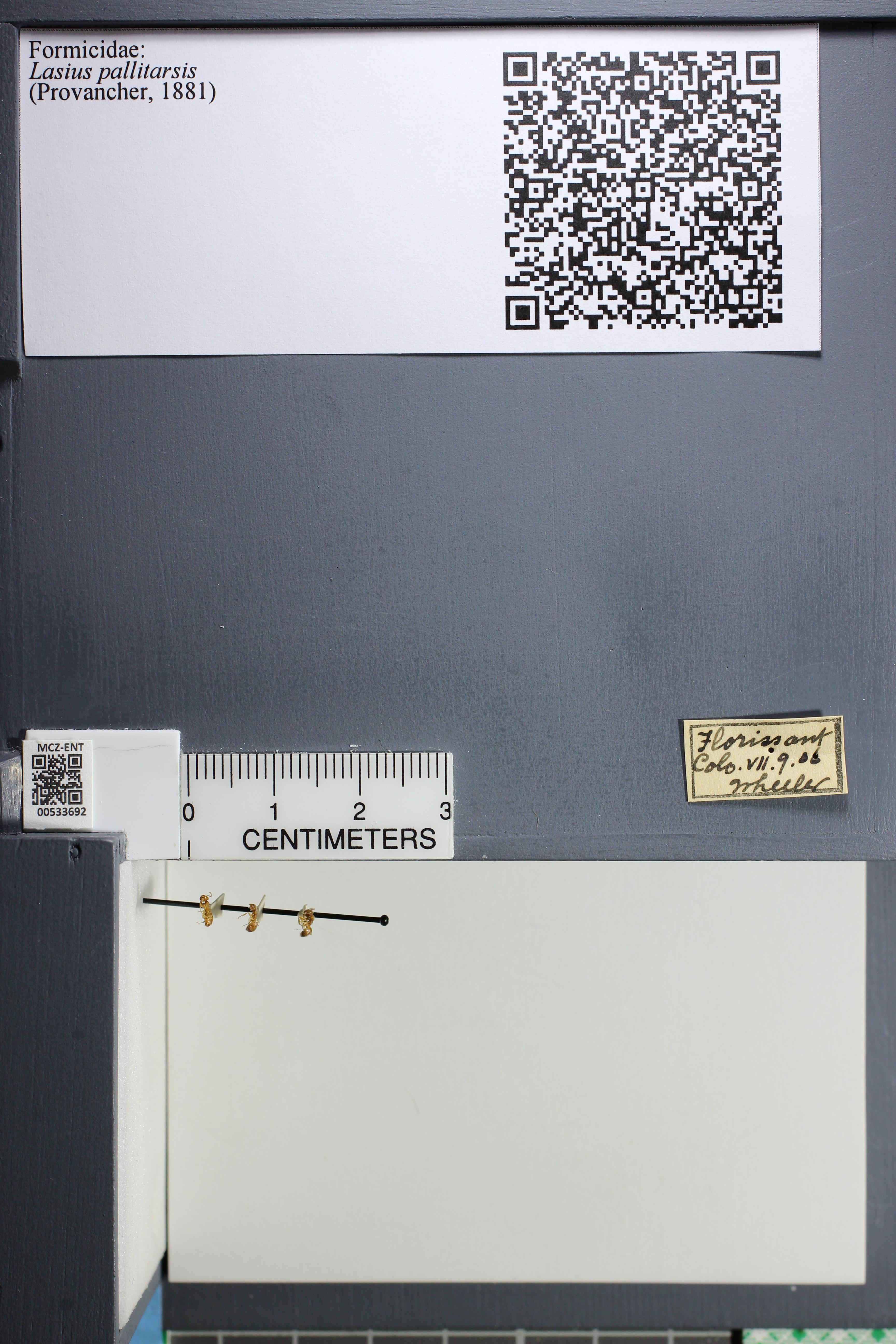 http://mczbase.mcz.harvard.edu/specimen_images/ent-formicidae/datashot/2014_09_25/IMG_305571.JPG