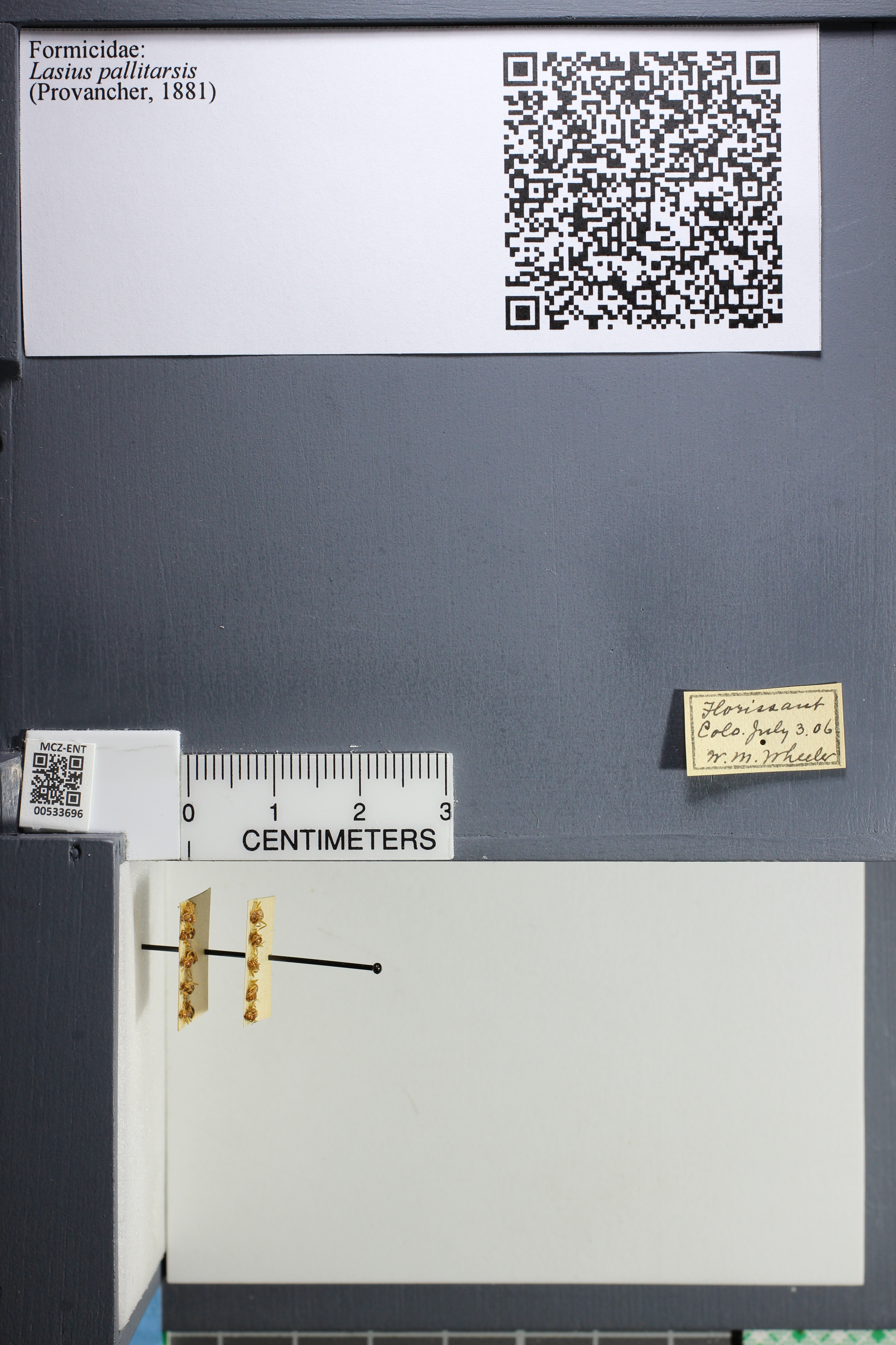 http://mczbase.mcz.harvard.edu/specimen_images/ent-formicidae/datashot/2014_09_25/IMG_305575.JPG
