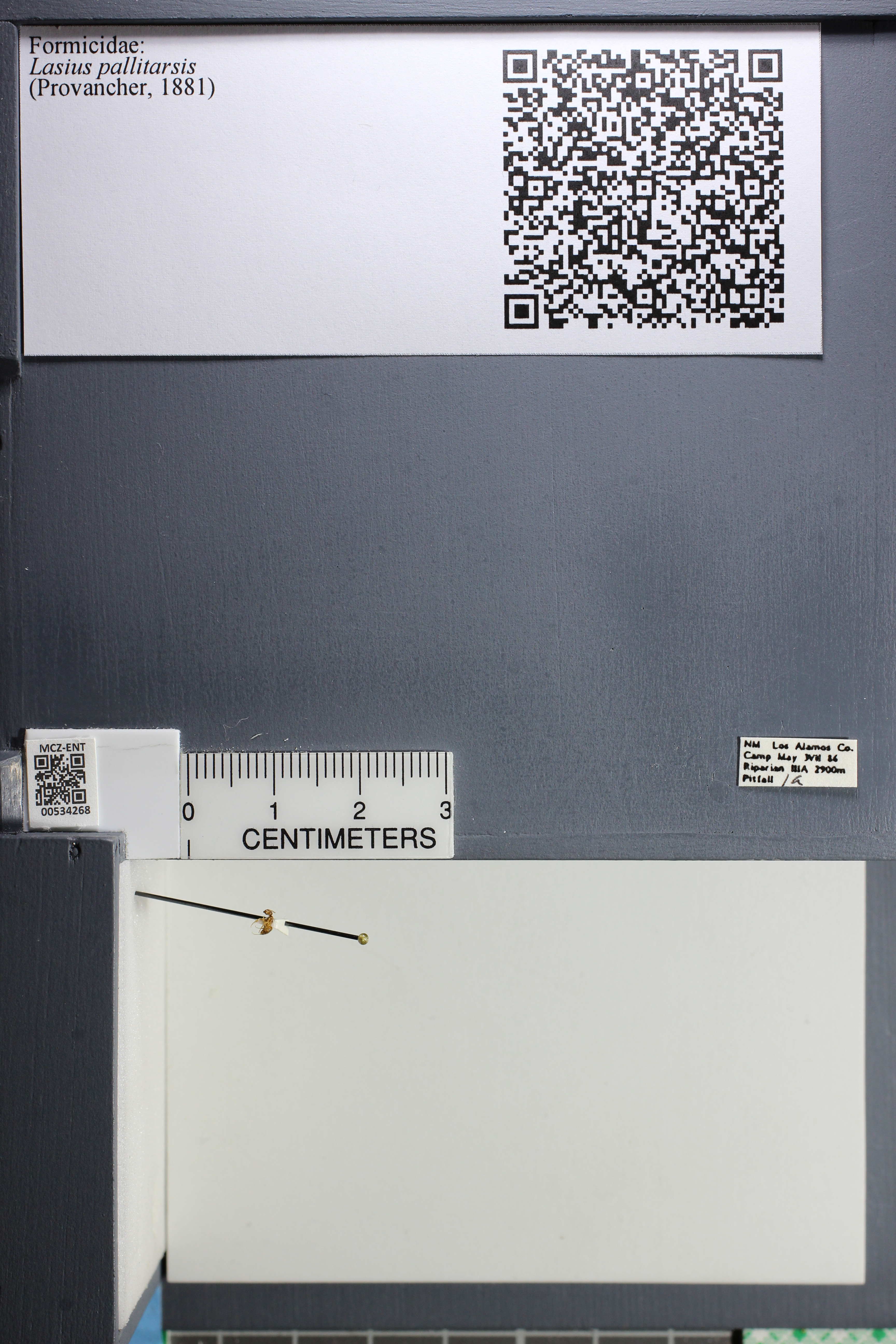 http://mczbase.mcz.harvard.edu/specimen_images/ent-formicidae/datashot/2014_10_01/IMG_306159.JPG
