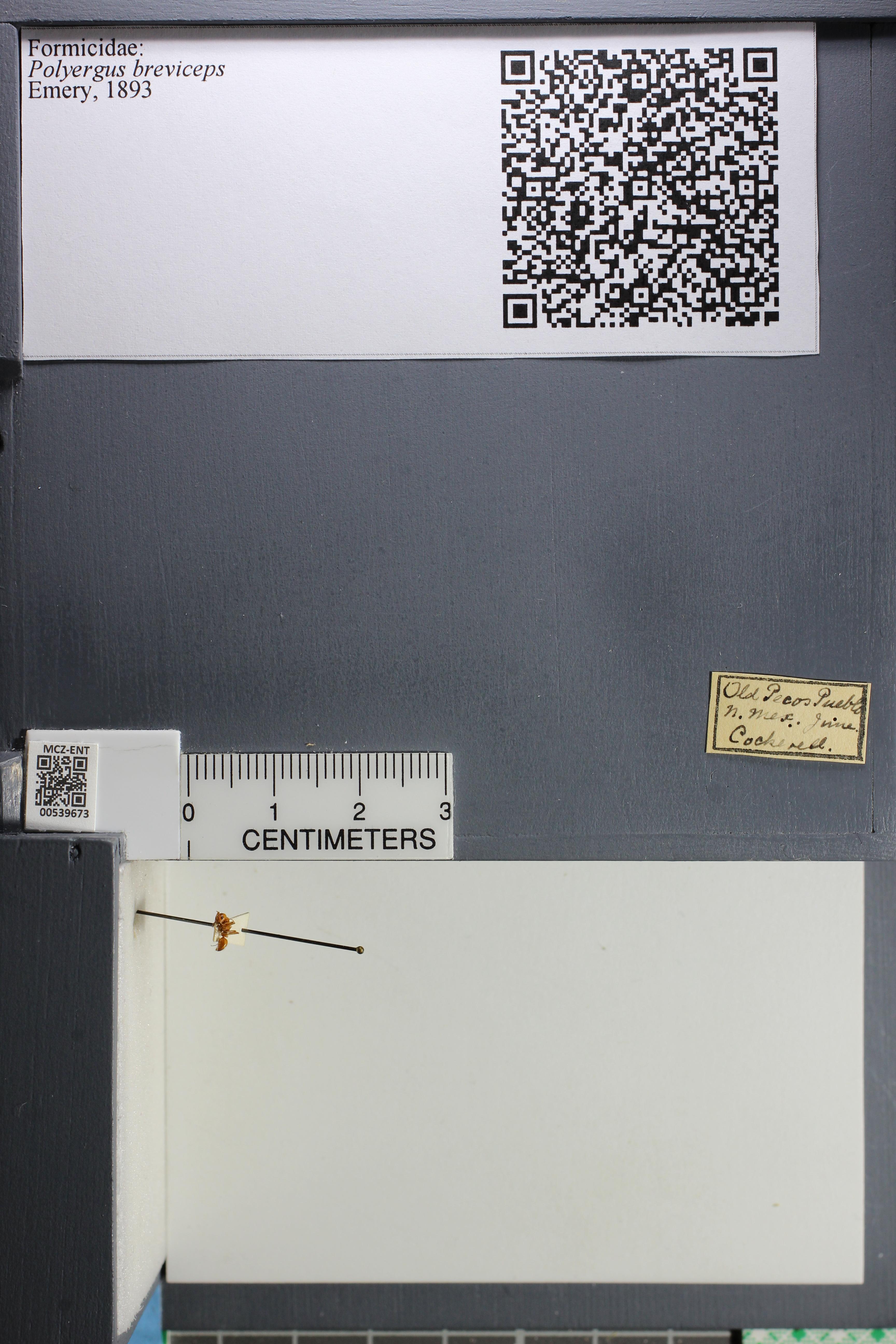 http://mczbase.mcz.harvard.edu/specimen_images/ent-formicidae/datashot/2014_12_10/IMG_307981.JPG