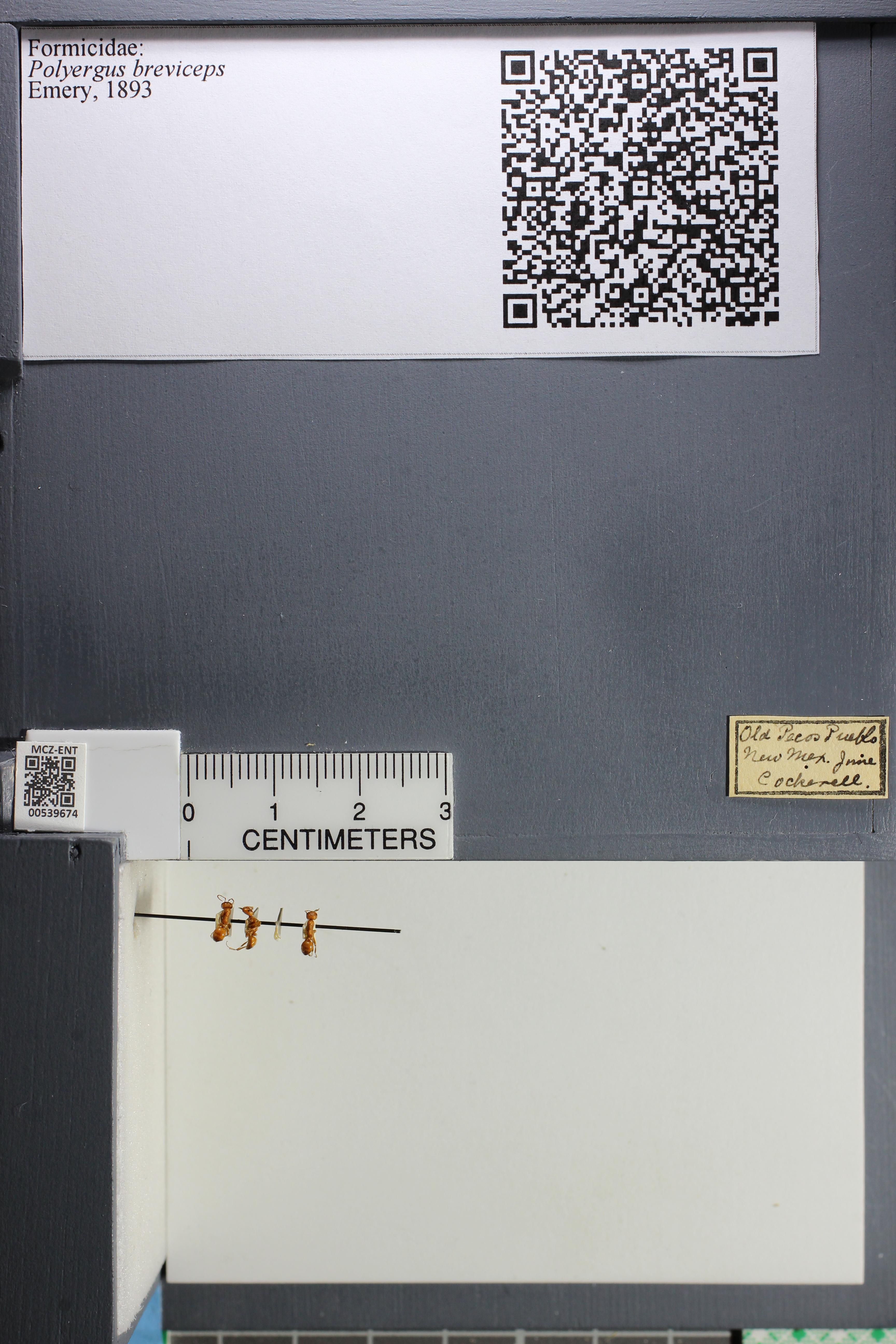 http://mczbase.mcz.harvard.edu/specimen_images/ent-formicidae/datashot/2014_12_10/IMG_307982.JPG