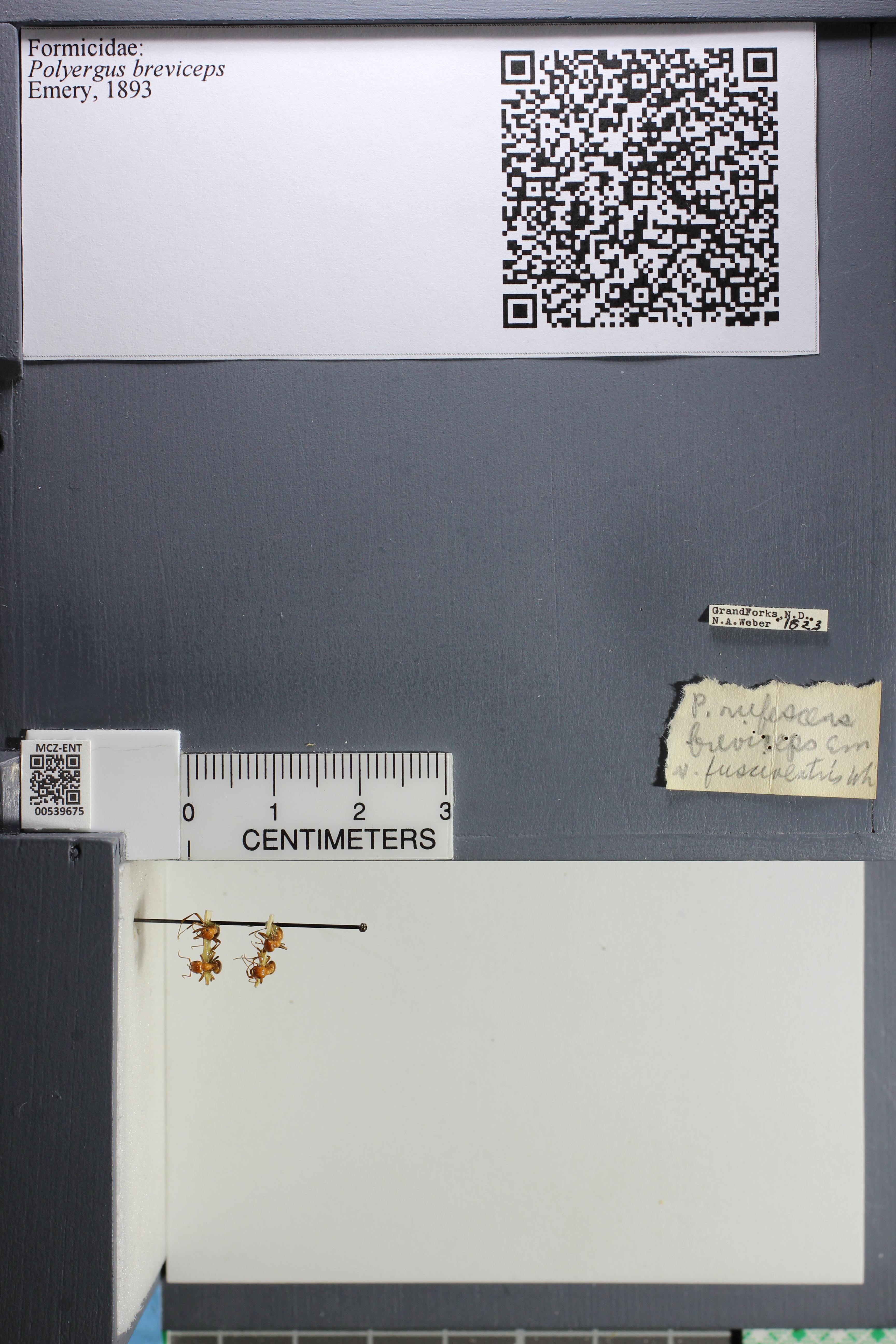 http://mczbase.mcz.harvard.edu/specimen_images/ent-formicidae/datashot/2014_12_10/IMG_307984.JPG