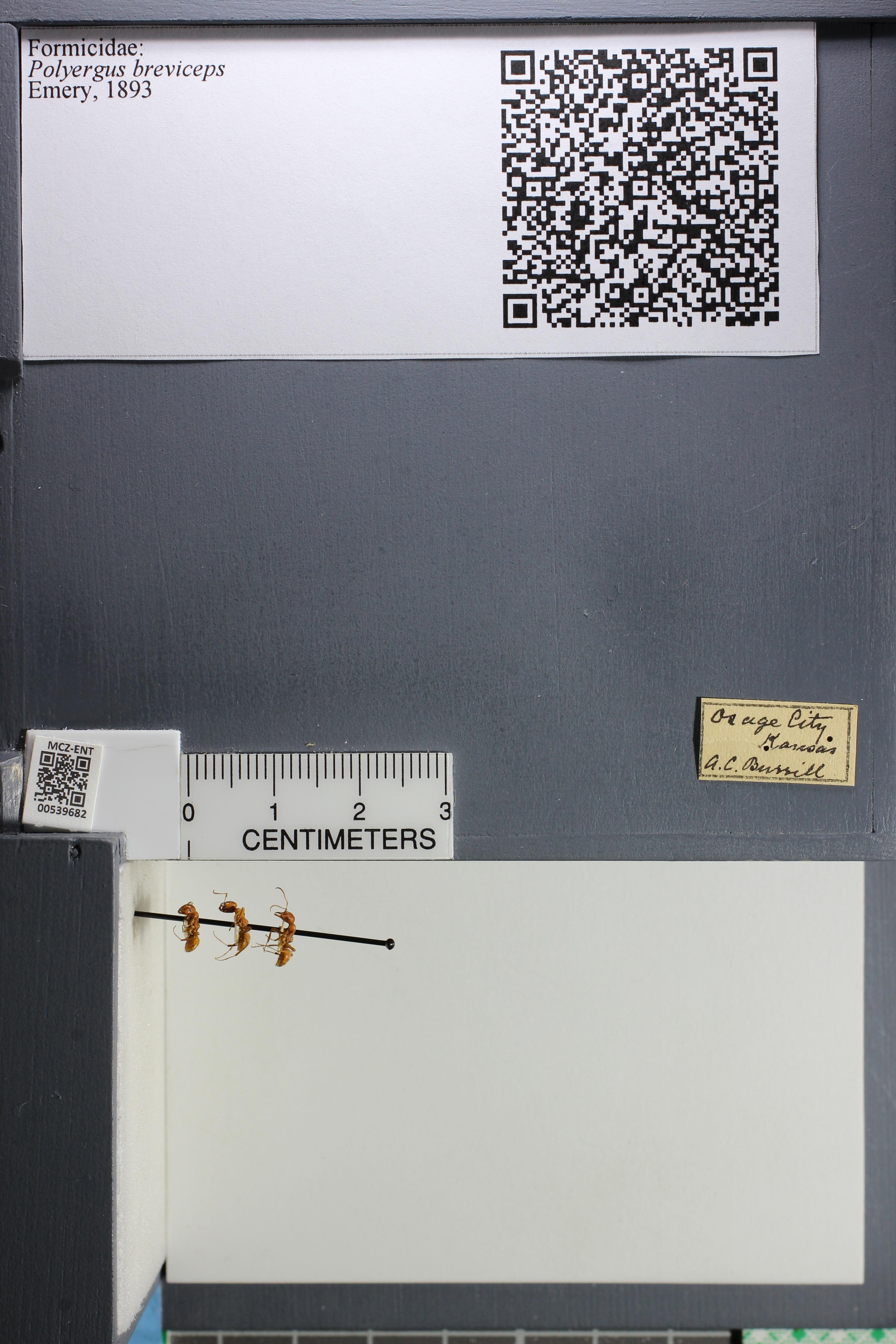 http://mczbase.mcz.harvard.edu/specimen_images/ent-formicidae/datashot/2014_12_10/IMG_307991.JPG