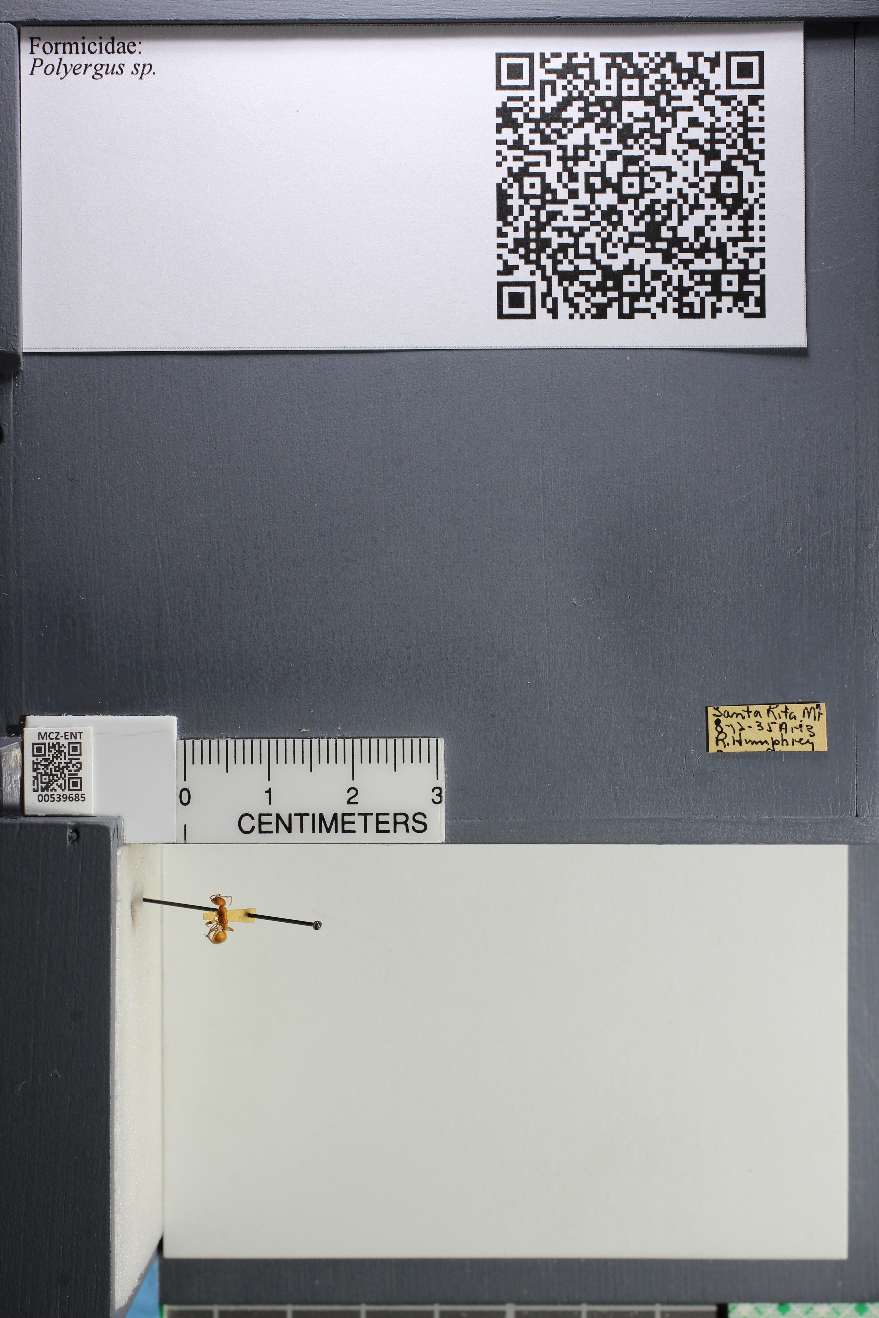 http://mczbase.mcz.harvard.edu/specimen_images/ent-formicidae/datashot/2014_12_10/IMG_307994.JPG