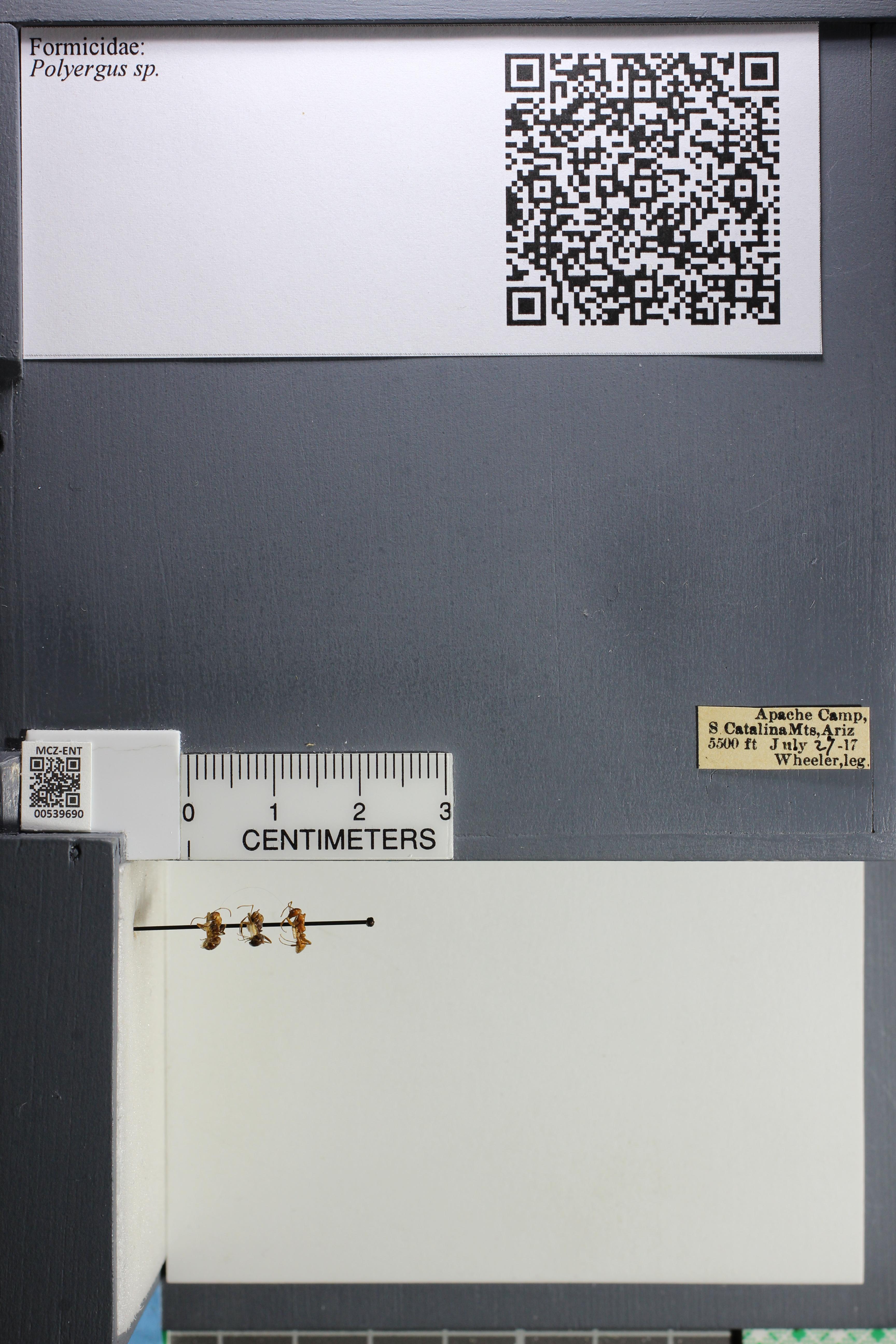 http://mczbase.mcz.harvard.edu/specimen_images/ent-formicidae/datashot/2014_12_10/IMG_307999.JPG