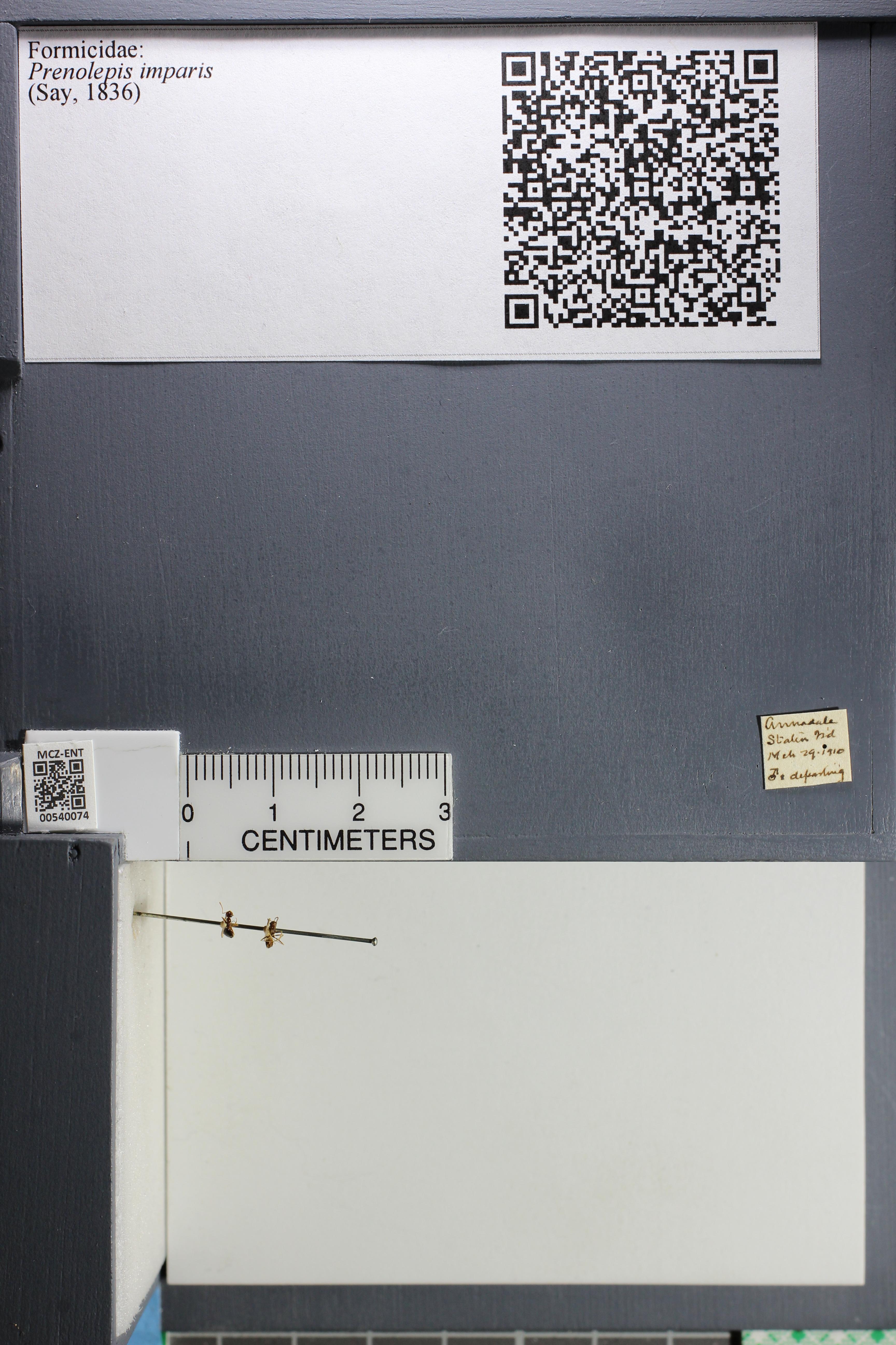 http://mczbase.mcz.harvard.edu/specimen_images/ent-formicidae/datashot/2014_12_15/IMG_308398.JPG