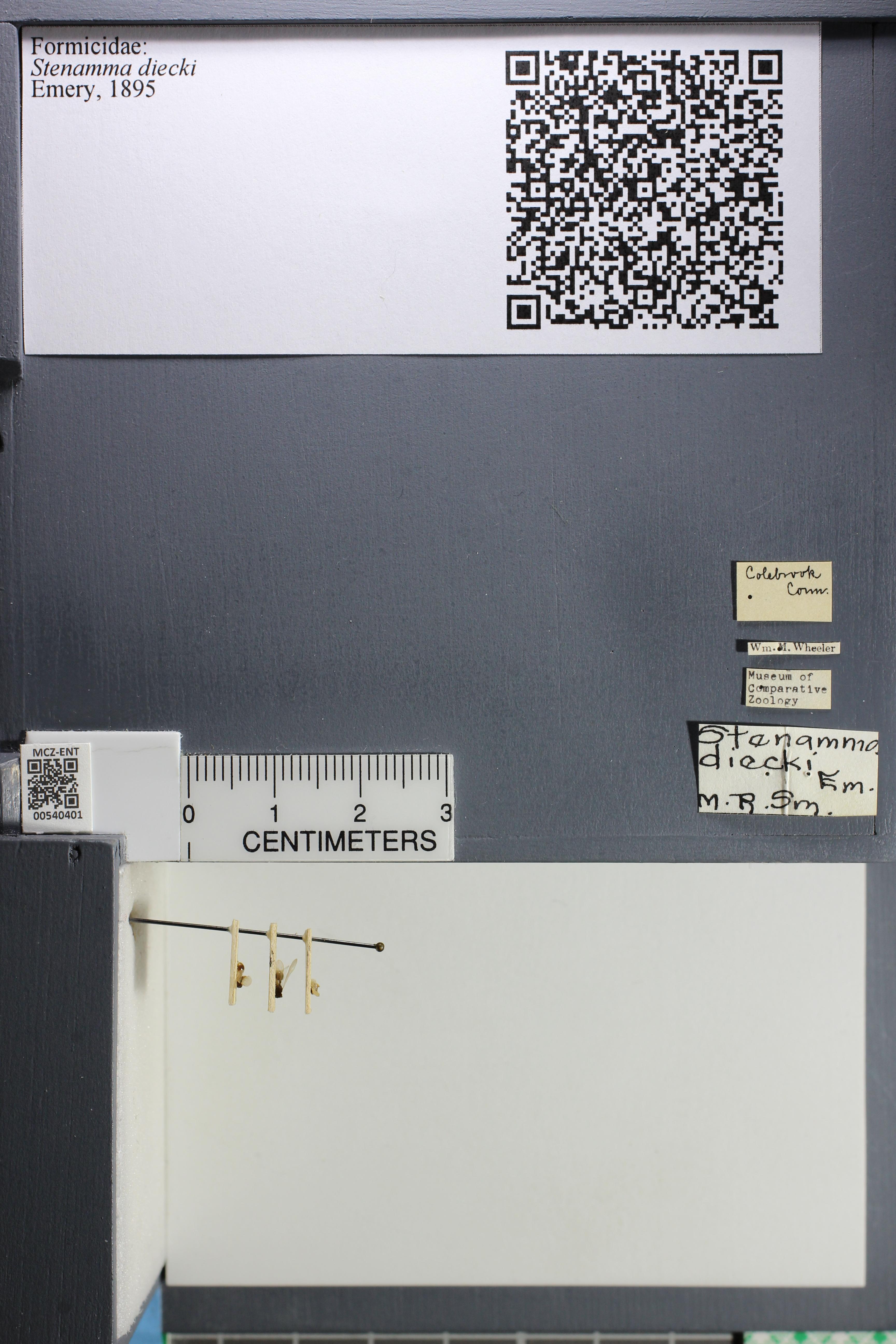 http://mczbase.mcz.harvard.edu/specimen_images/ent-formicidae/datashot/2014_12_17/IMG_308788.JPG