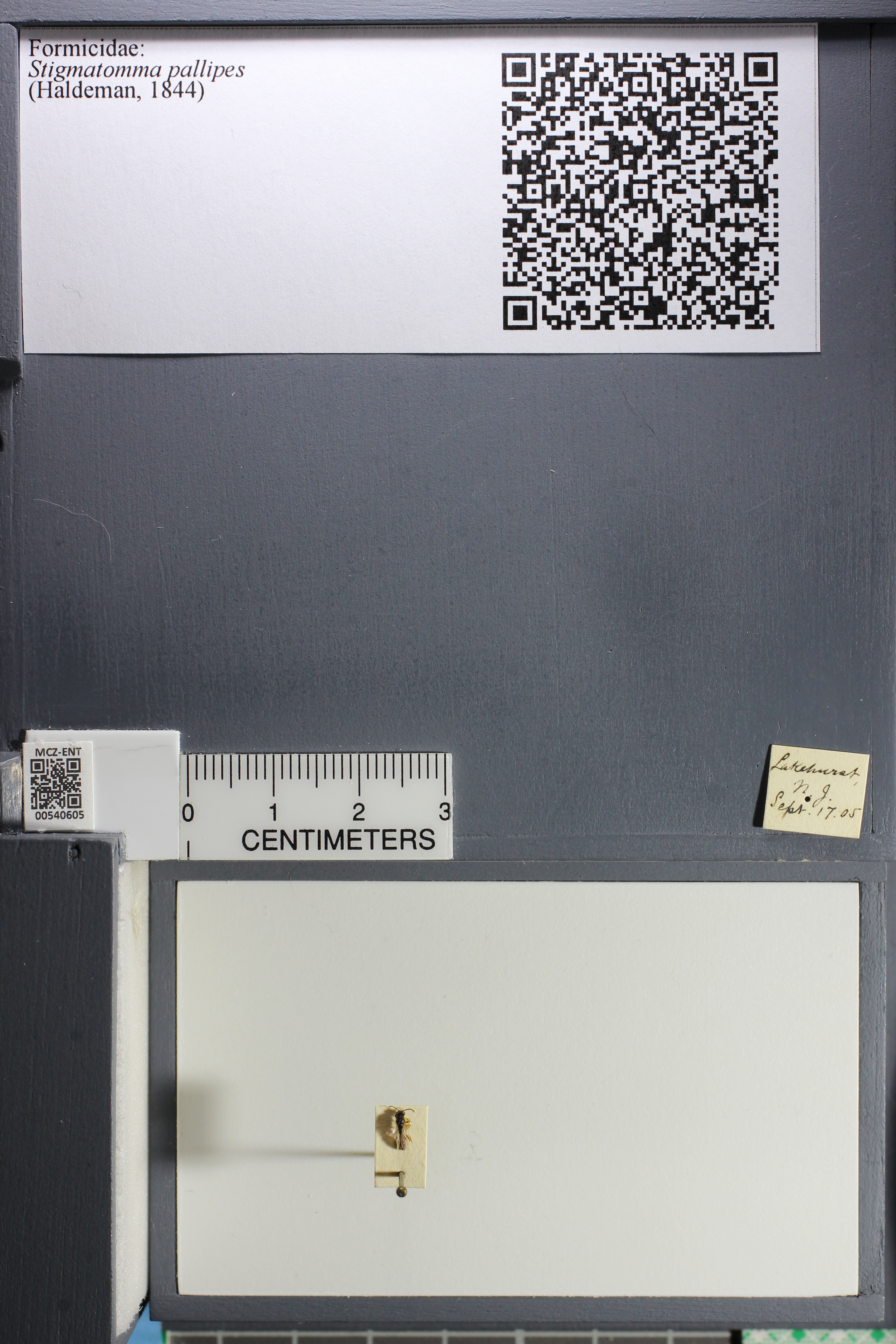 http://mczbase.mcz.harvard.edu/specimen_images/ent-formicidae/datashot/2014_12_19/IMG_308923.JPG