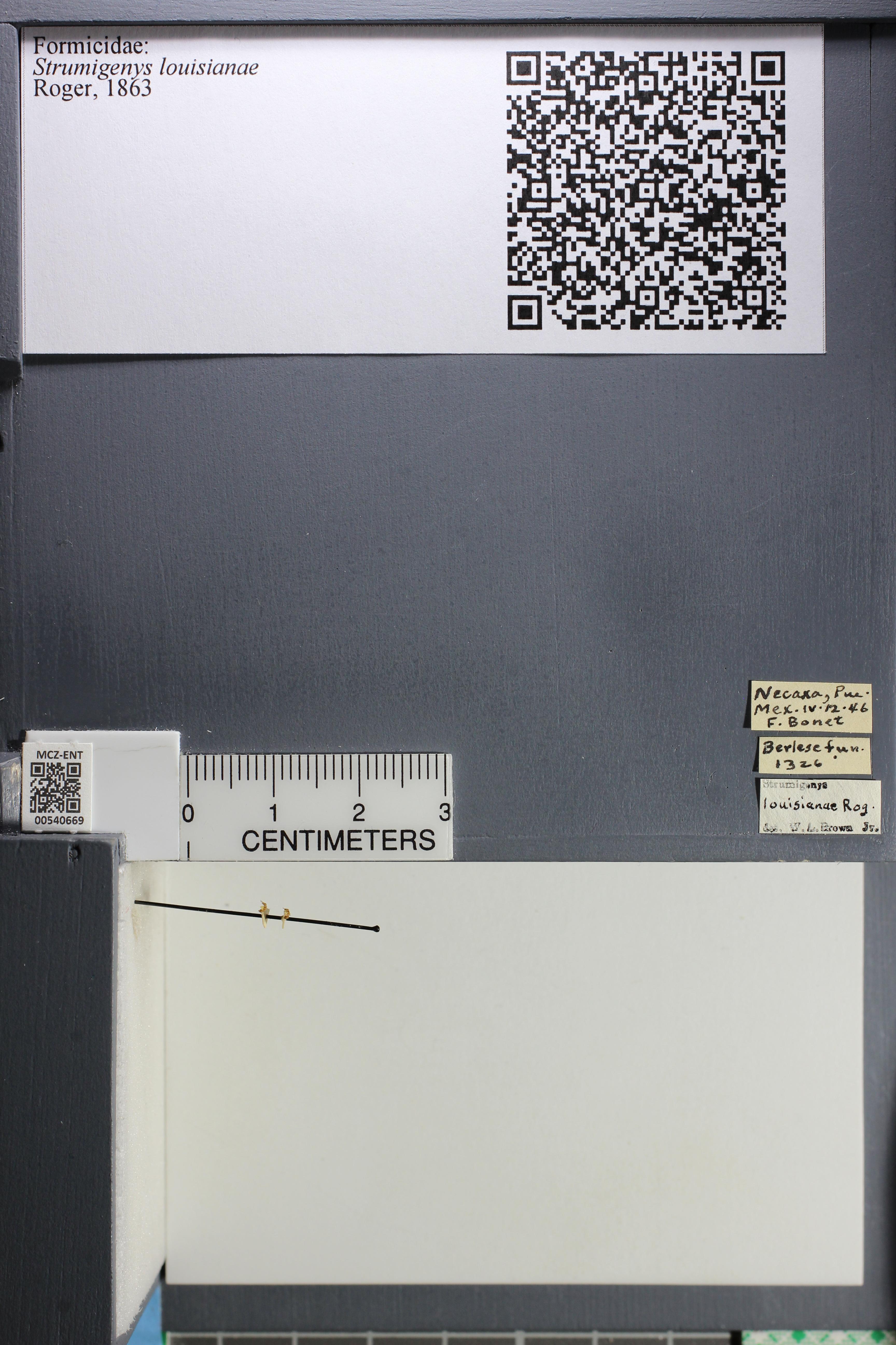 http://mczbase.mcz.harvard.edu/specimen_images/ent-formicidae/datashot/2014_12_19/IMG_308989.JPG