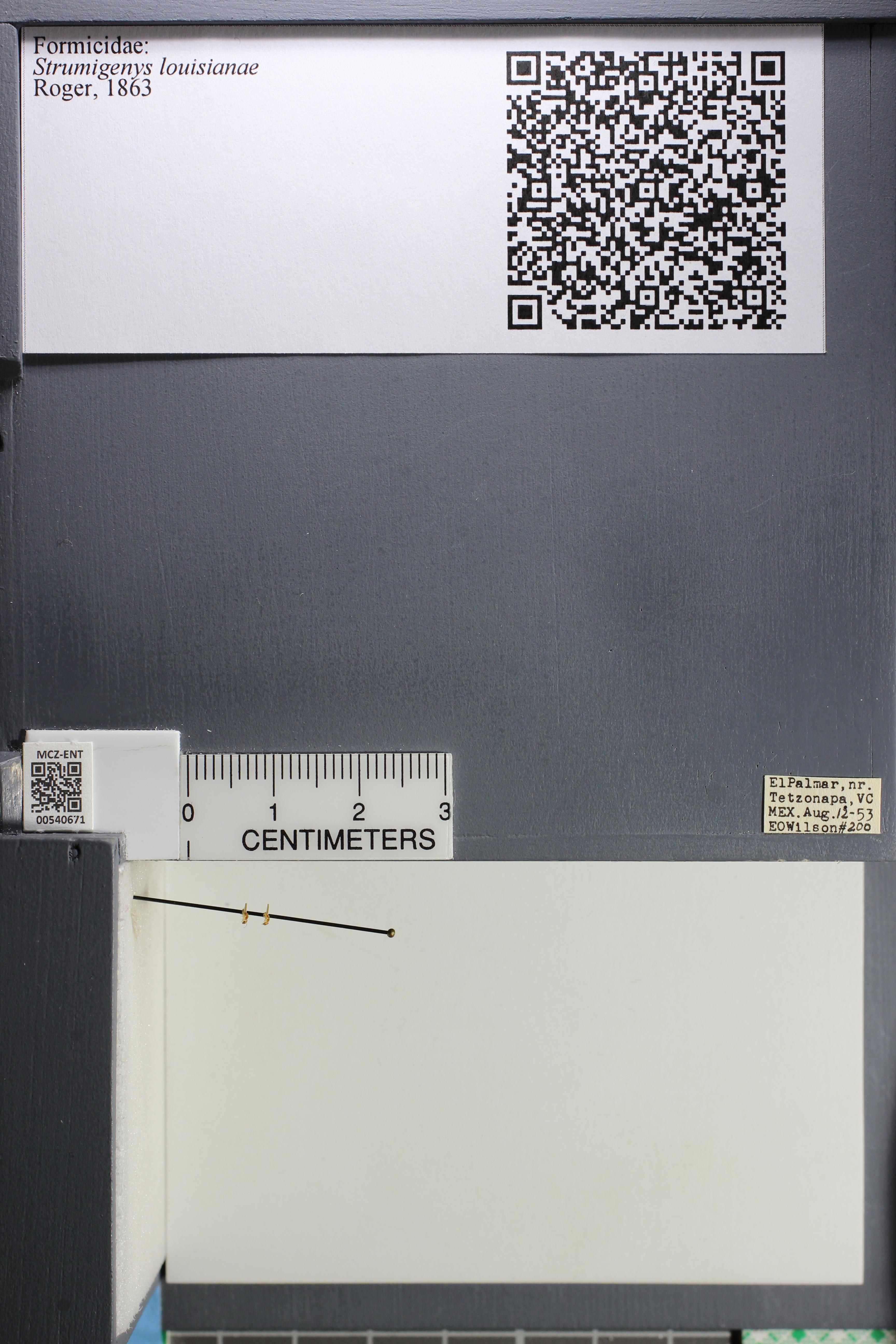 http://mczbase.mcz.harvard.edu/specimen_images/ent-formicidae/datashot/2014_12_19/IMG_308991.JPG