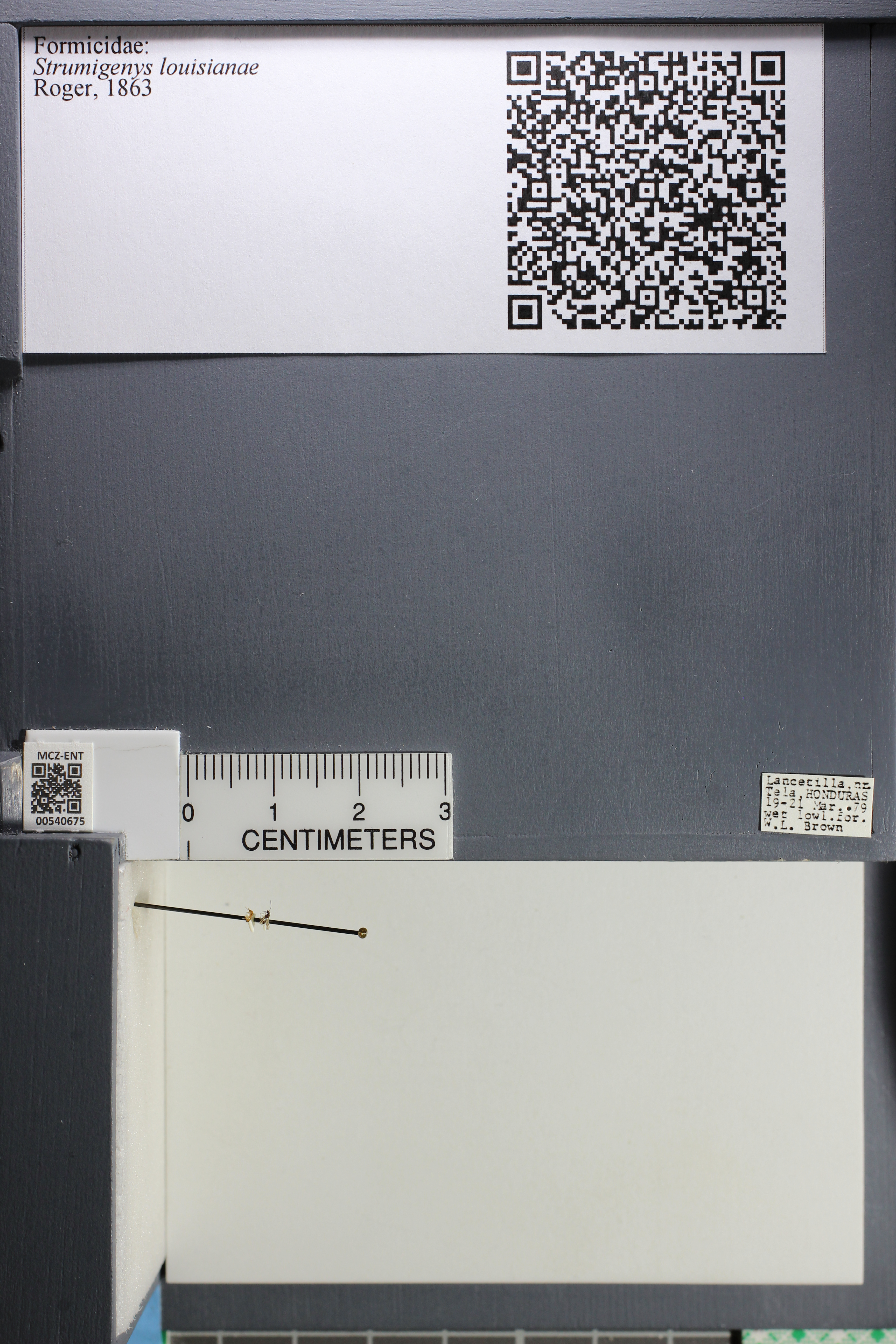 http://mczbase.mcz.harvard.edu/specimen_images/ent-formicidae/datashot/2014_12_19/IMG_308995.JPG