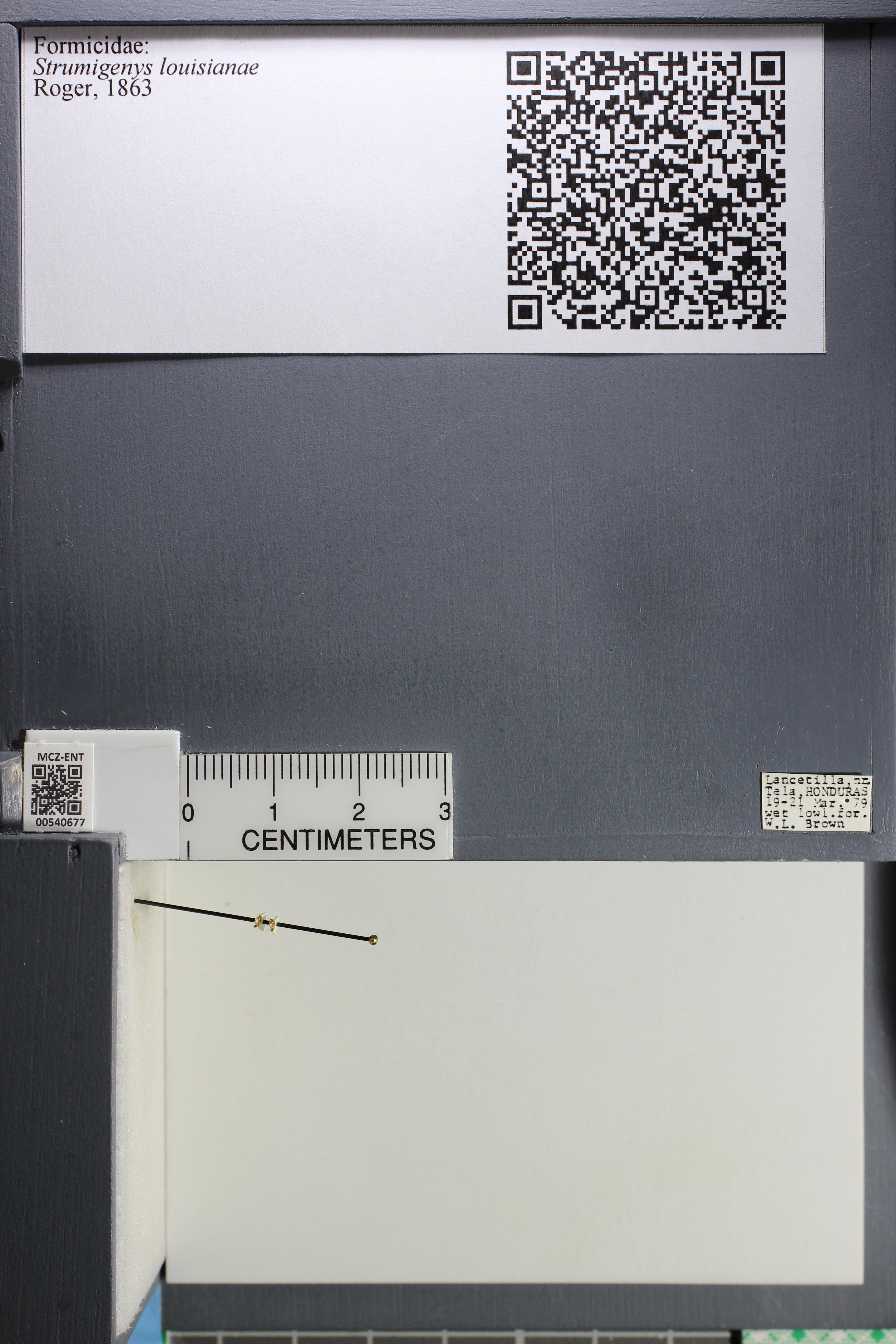 http://mczbase.mcz.harvard.edu/specimen_images/ent-formicidae/datashot/2014_12_19/IMG_308997.JPG