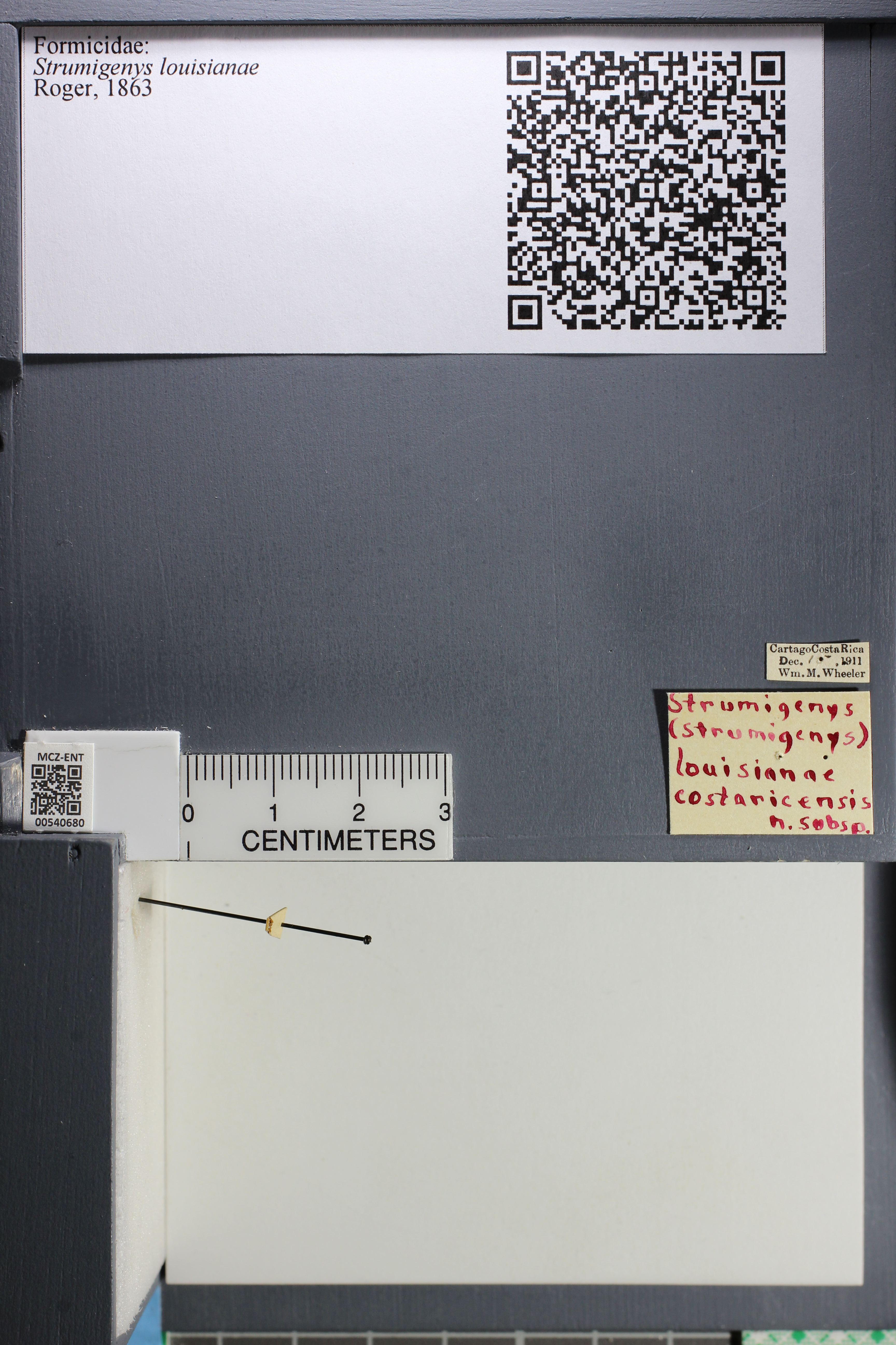 http://mczbase.mcz.harvard.edu/specimen_images/ent-formicidae/datashot/2014_12_19/IMG_309000.JPG