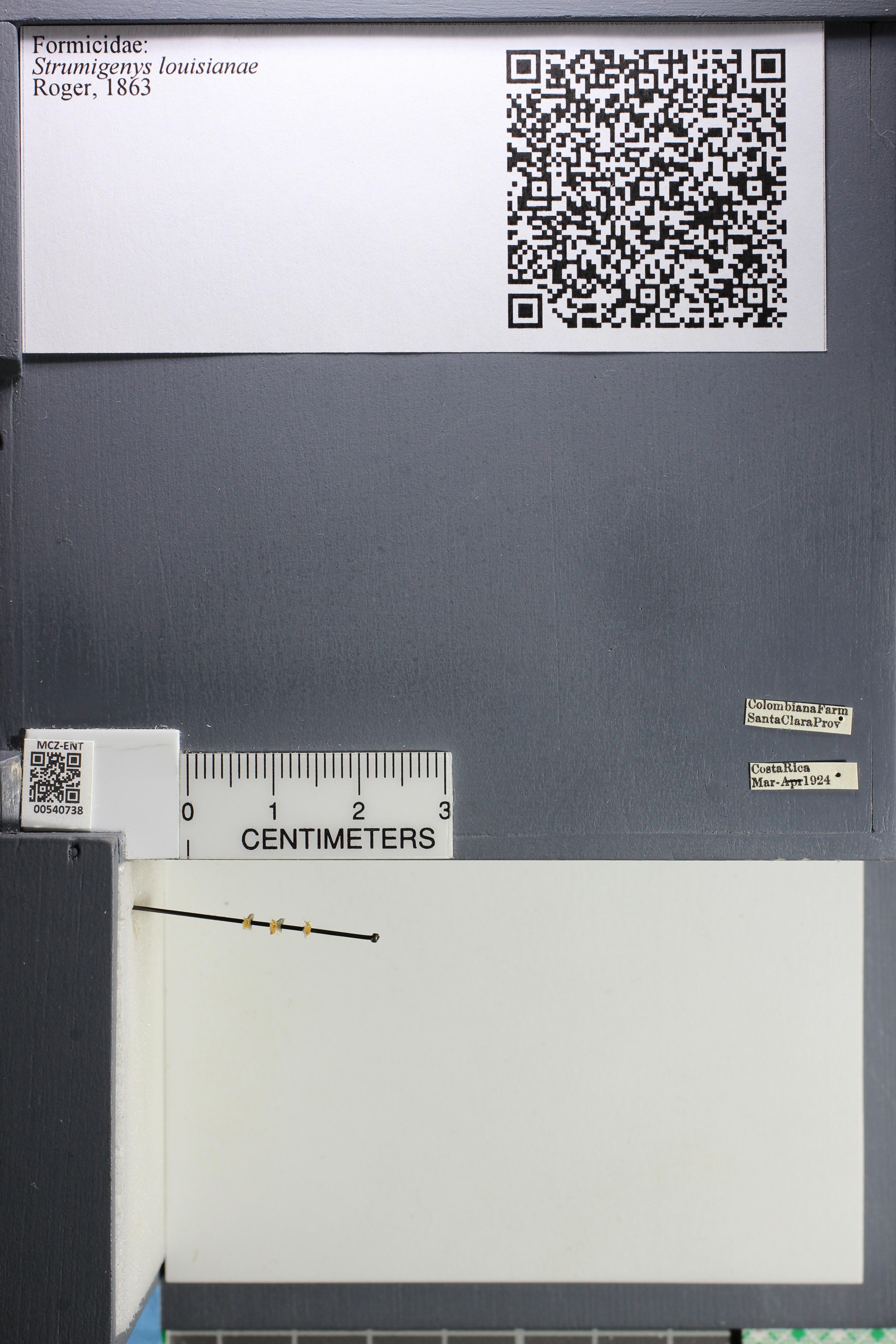 http://mczbase.mcz.harvard.edu/specimen_images/ent-formicidae/datashot/2014_12_22/IMG_309008.JPG