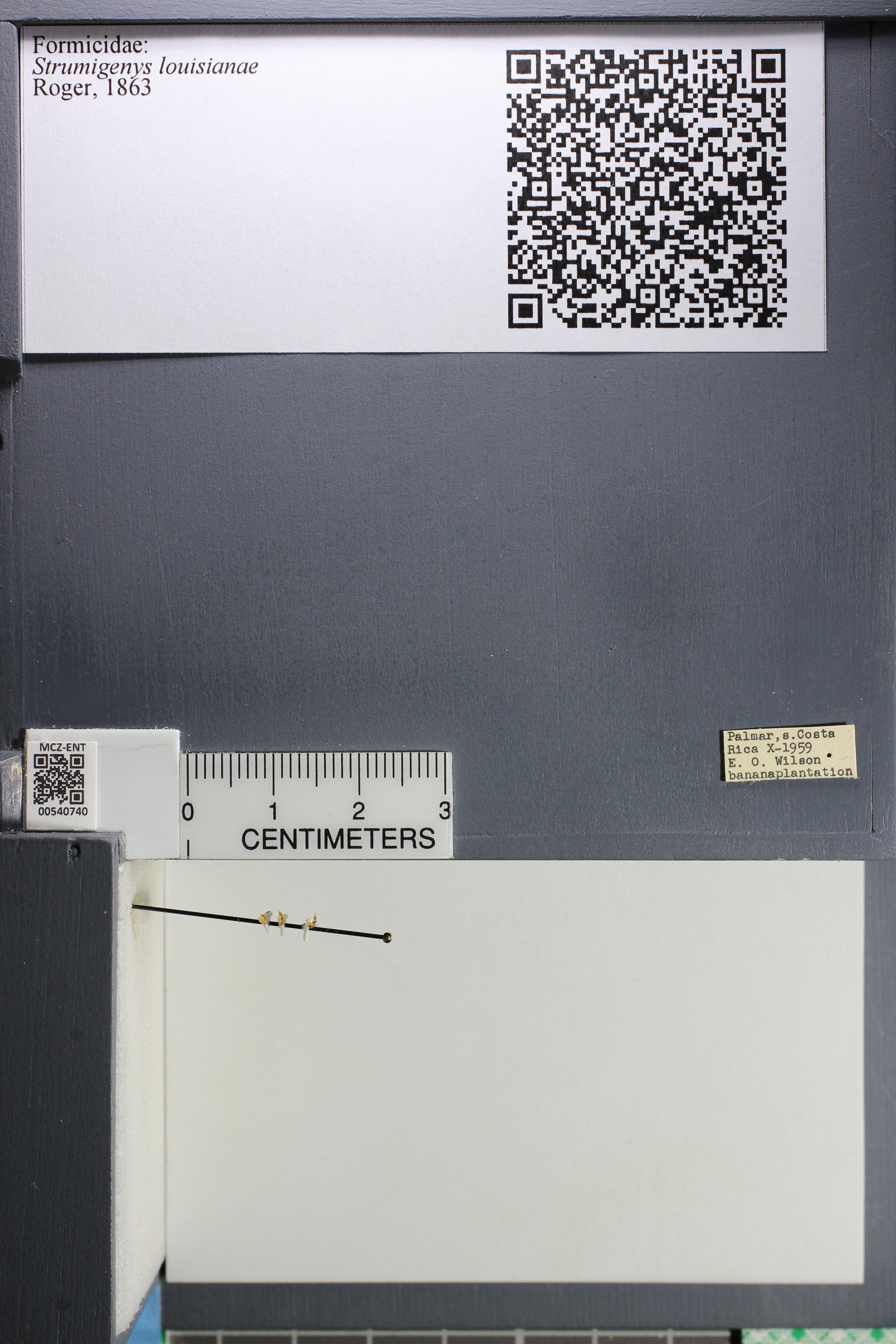 http://mczbase.mcz.harvard.edu/specimen_images/ent-formicidae/datashot/2014_12_22/IMG_309010.JPG