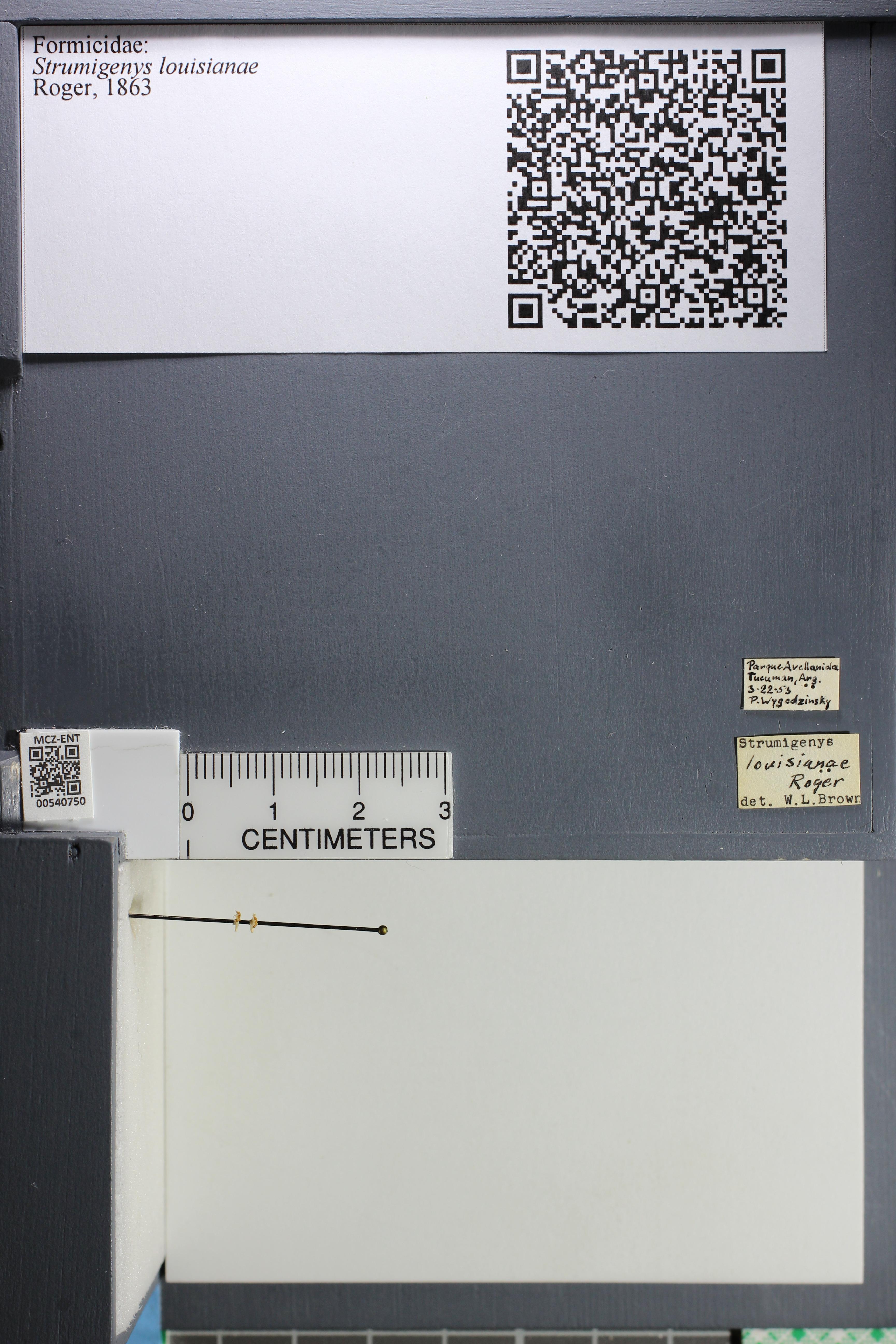 http://mczbase.mcz.harvard.edu/specimen_images/ent-formicidae/datashot/2014_12_22/IMG_309021.JPG