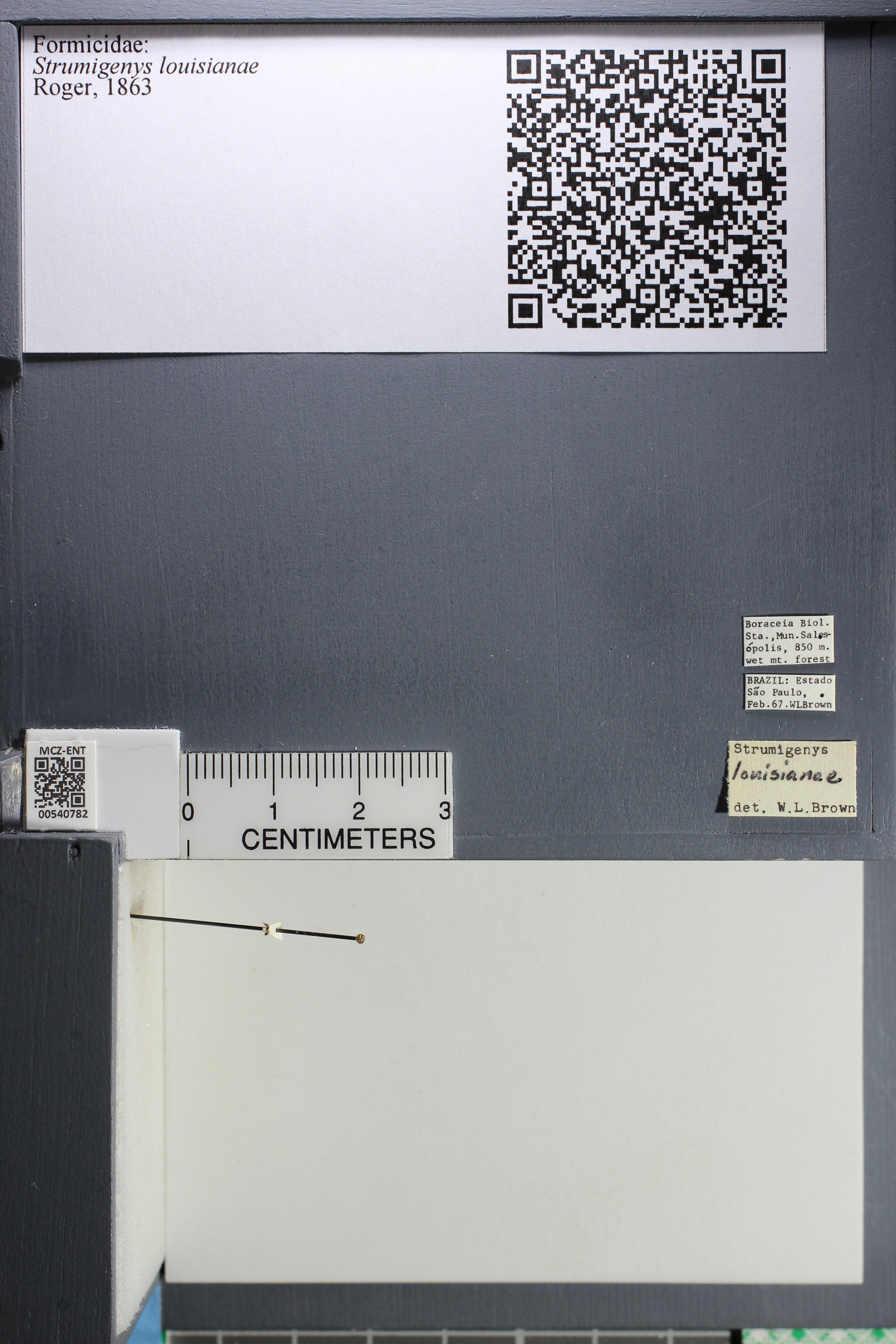 http://mczbase.mcz.harvard.edu/specimen_images/ent-formicidae/datashot/2014_12_22/IMG_309062.JPG