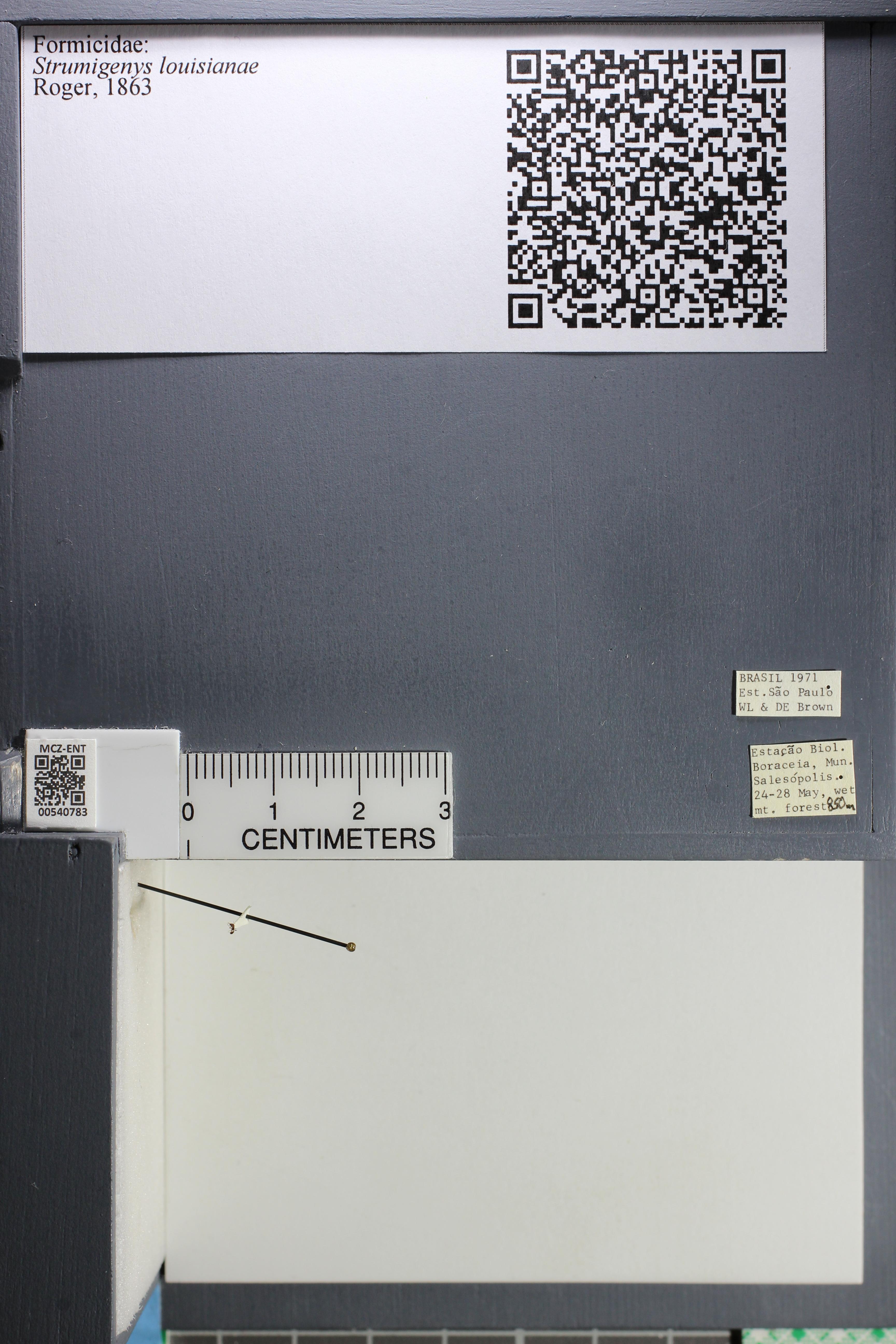 http://mczbase.mcz.harvard.edu/specimen_images/ent-formicidae/datashot/2014_12_22/IMG_309063.JPG