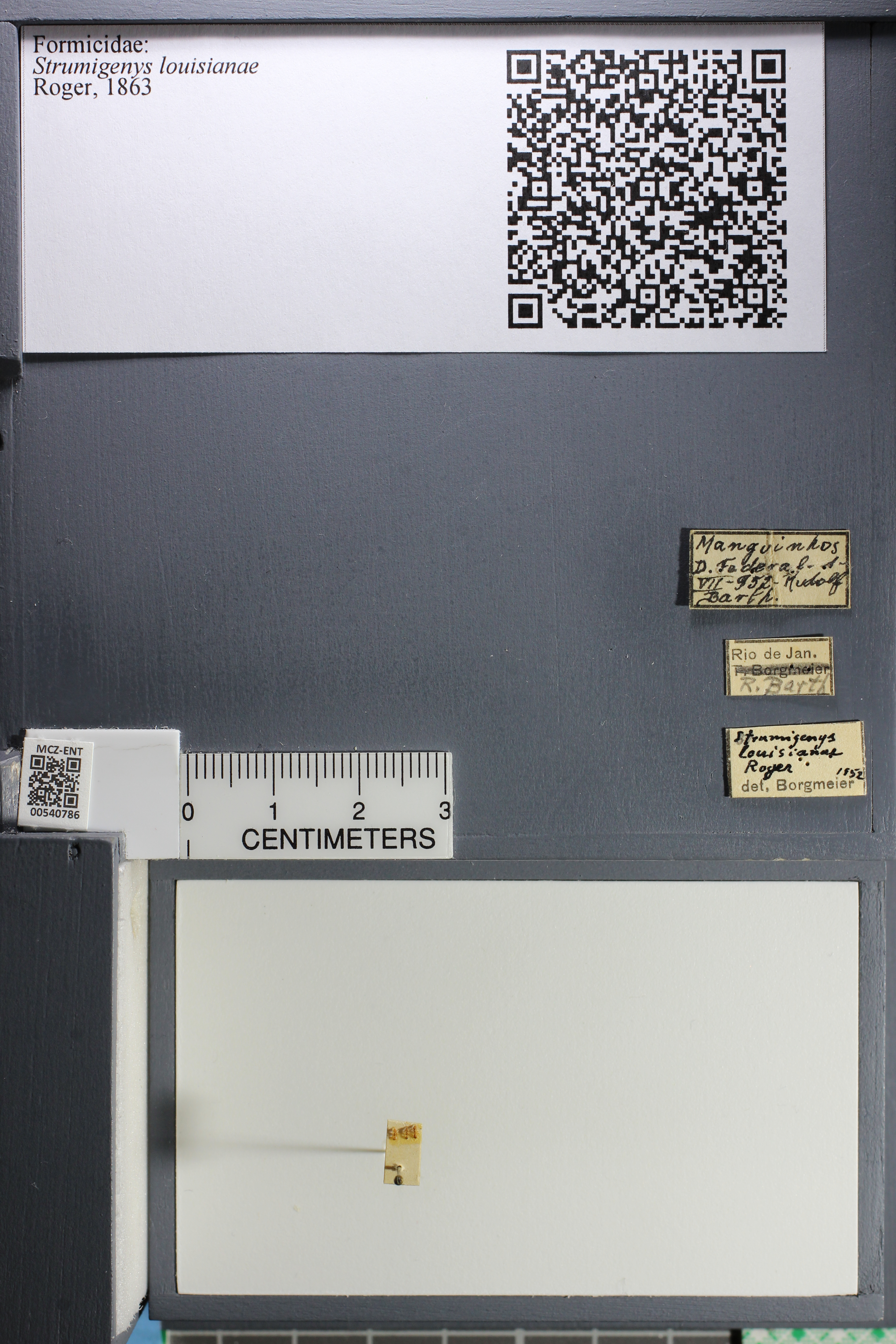 http://mczbase.mcz.harvard.edu/specimen_images/ent-formicidae/datashot/2014_12_22/IMG_309066.JPG