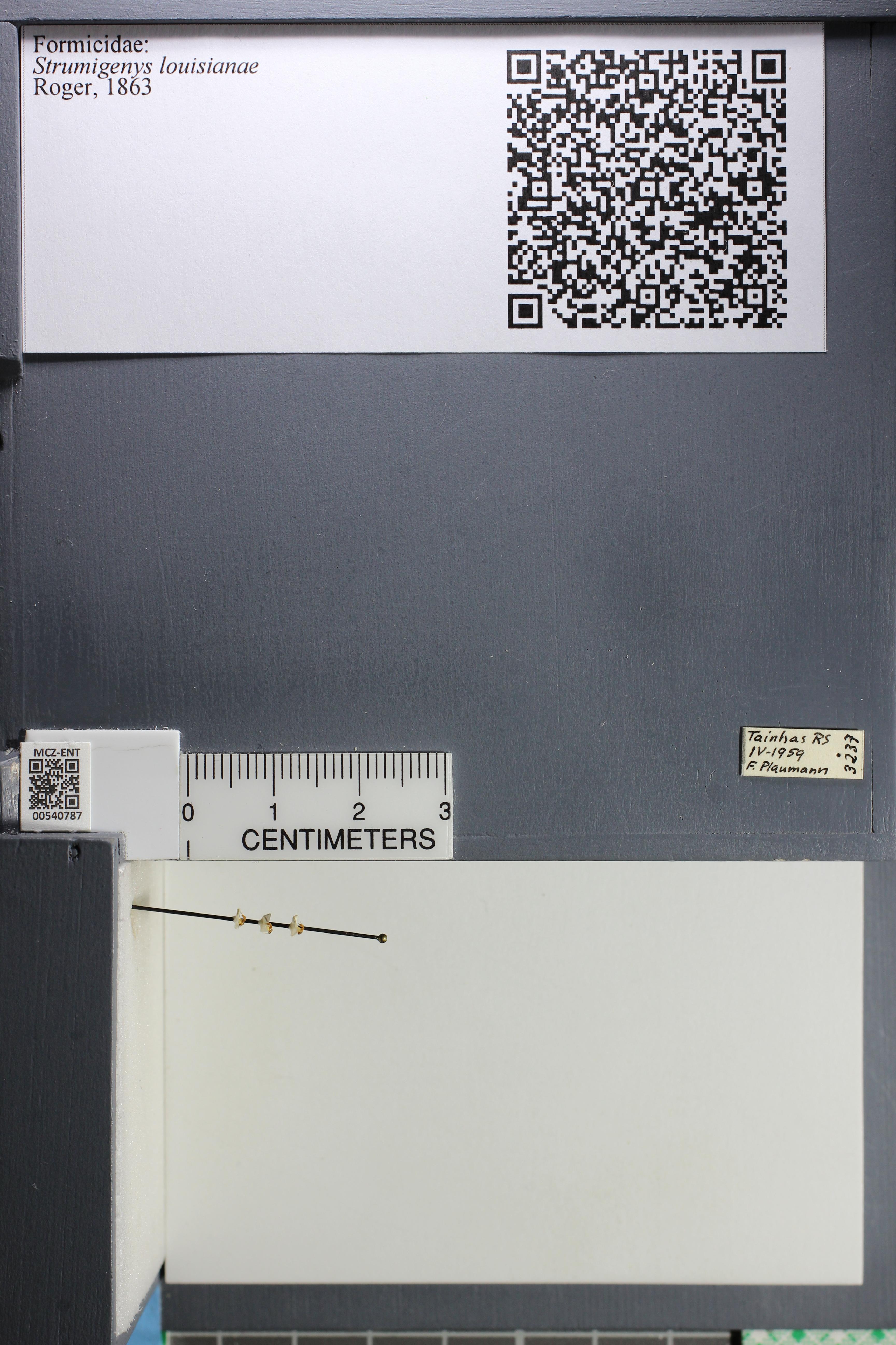 http://mczbase.mcz.harvard.edu/specimen_images/ent-formicidae/datashot/2014_12_22/IMG_309067.JPG