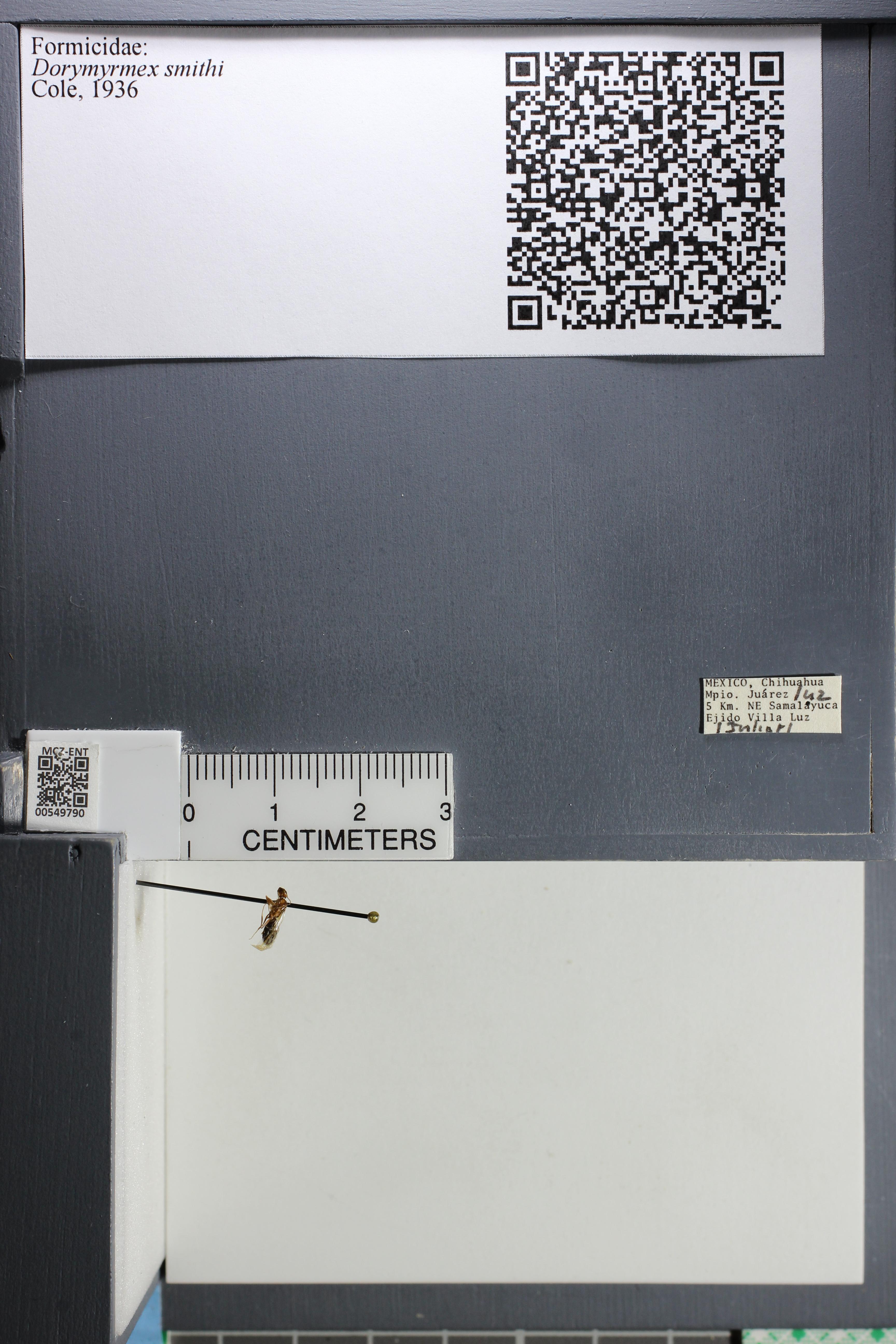 http://mczbase.mcz.harvard.edu/specimen_images/ent-formicidae/datashot/2015_03_13/IMG_315640.JPG