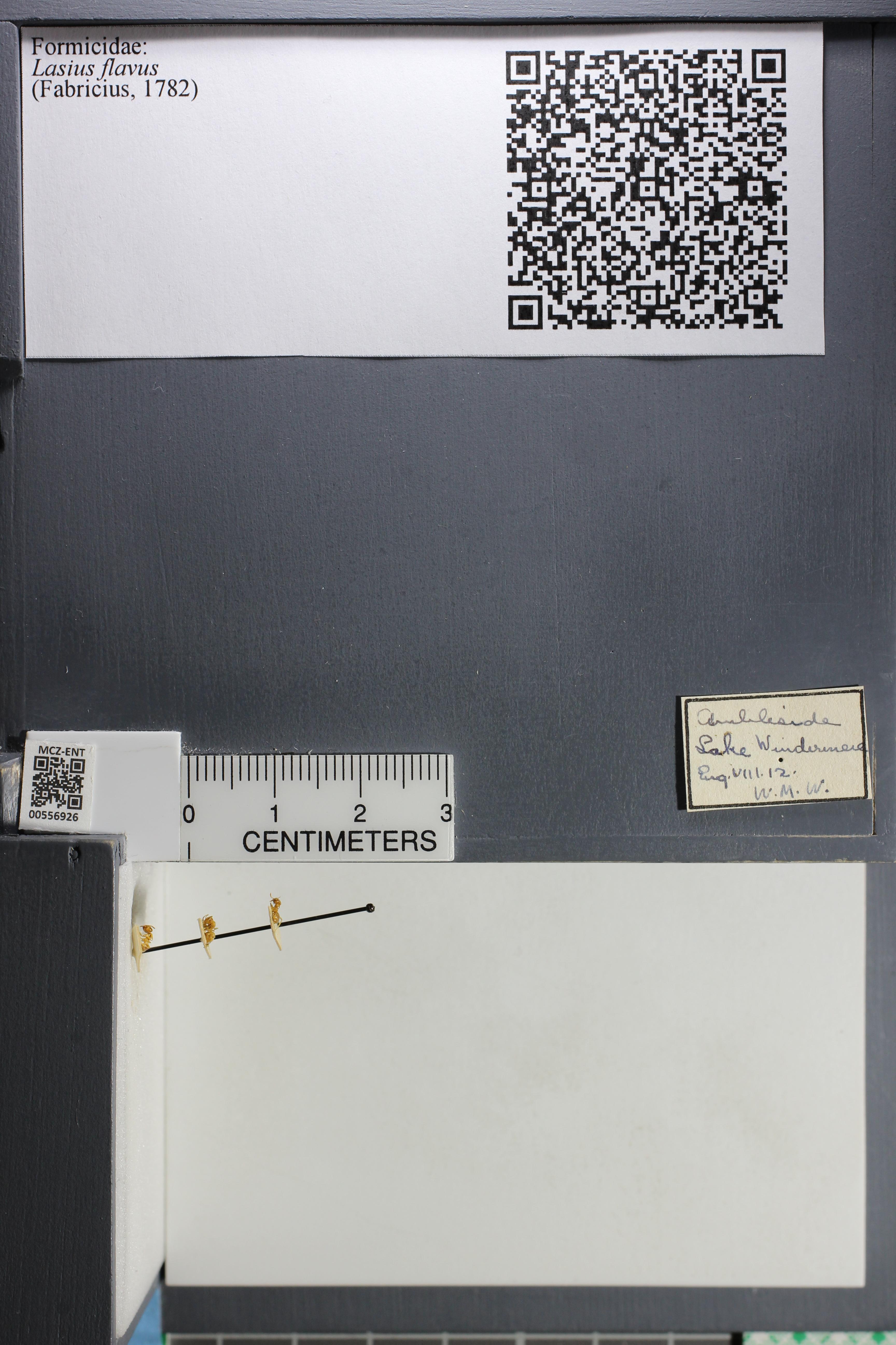 http://mczbase.mcz.harvard.edu/specimen_images/ent-formicidae/datashot/2015_04_28/IMG_322147.JPG