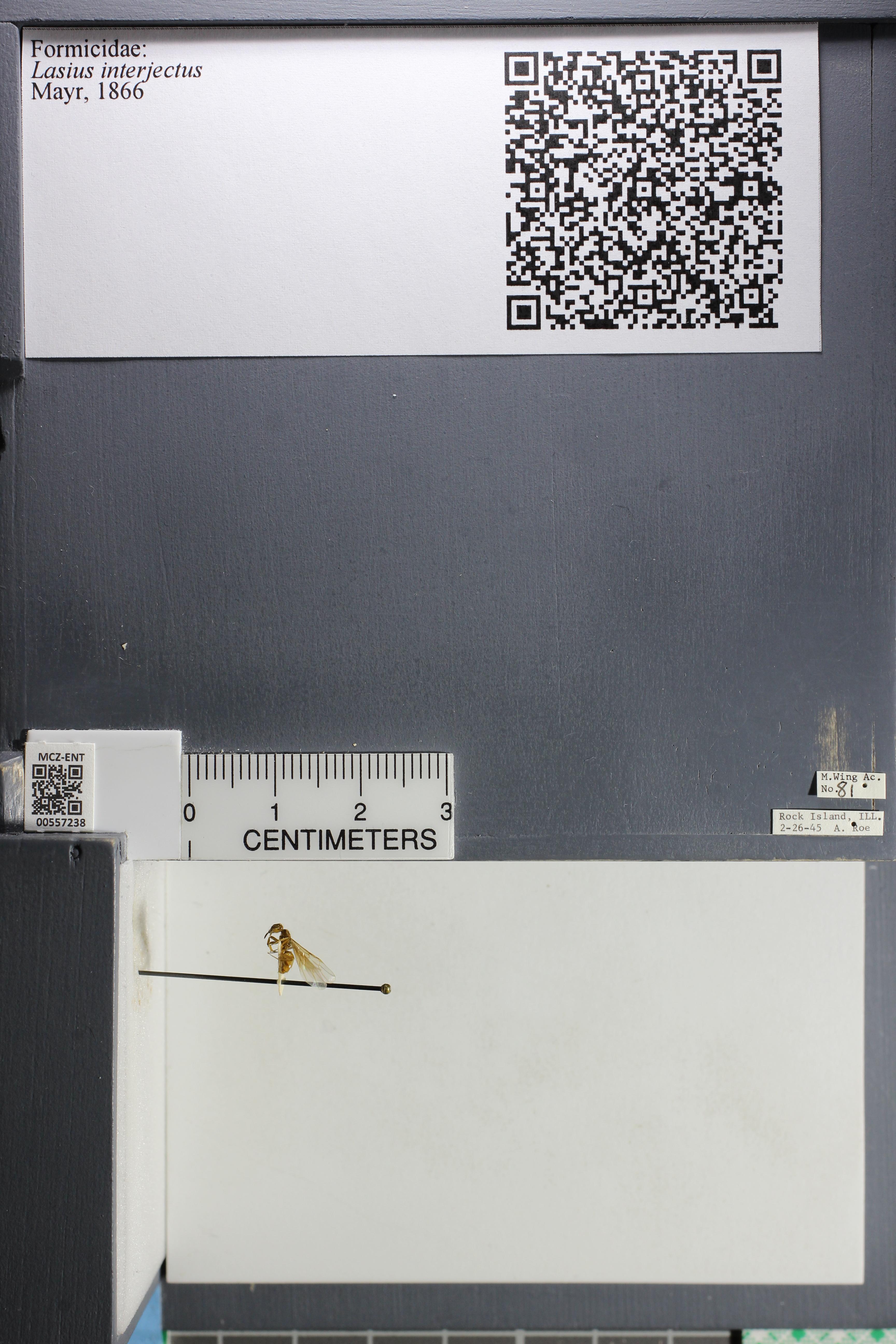 http://mczbase.mcz.harvard.edu/specimen_images/ent-formicidae/datashot/2015_04_30/IMG_322594.JPG